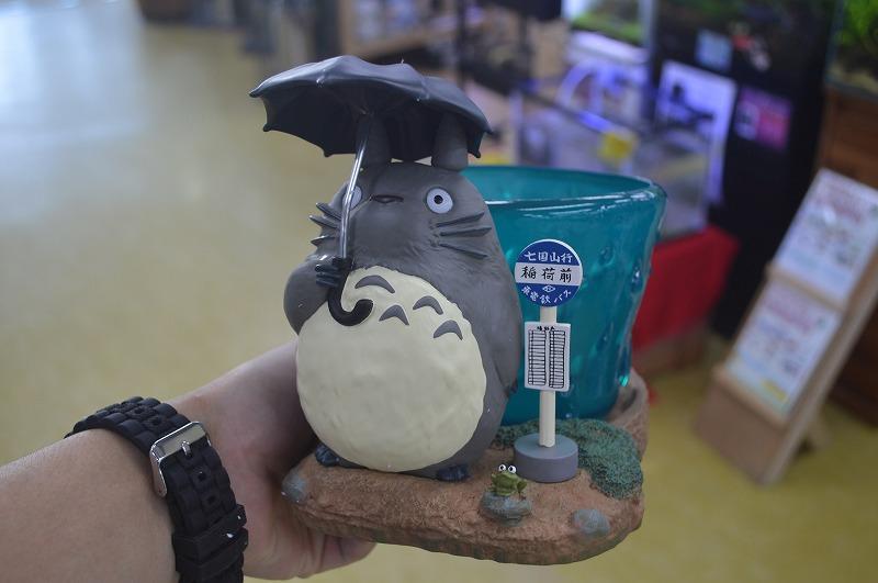 梅雨は、トトロと相合傘!