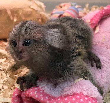 【mozoペポニ】サルとジリスとウサギ
