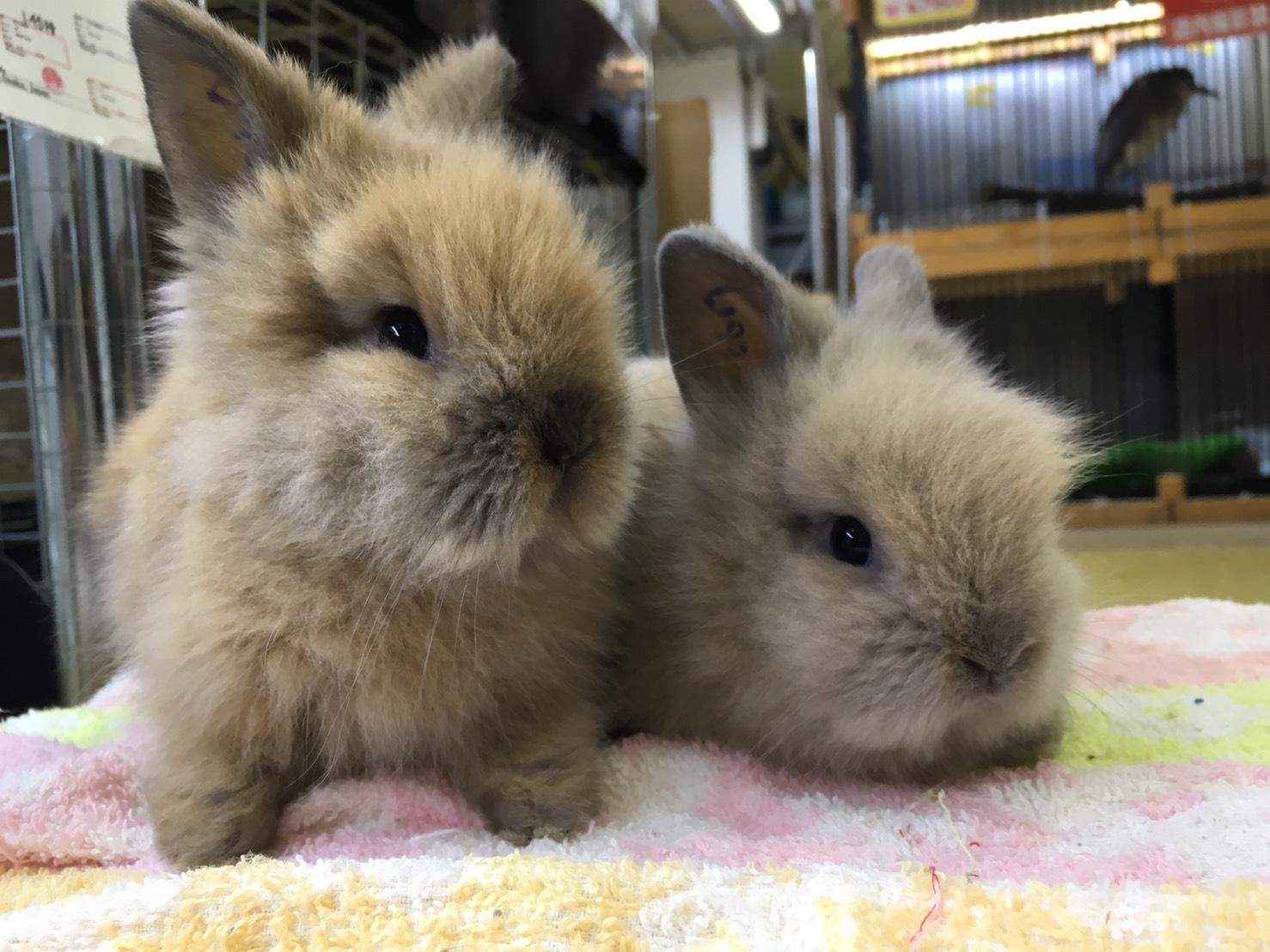 ウサギ満載!!久々にたくさんのウサギに囲まれています♪@インター小動物