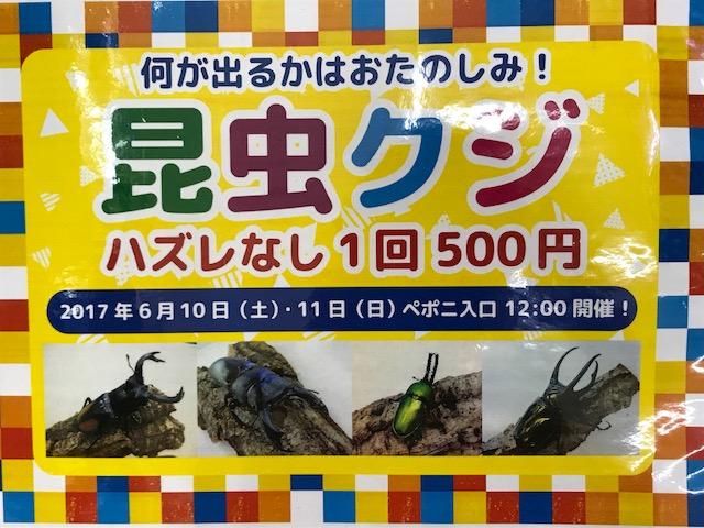 【mozoペポニ】6/10・11昆虫クジ~♪