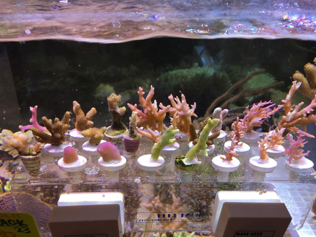 フラグサンゴ追加!!