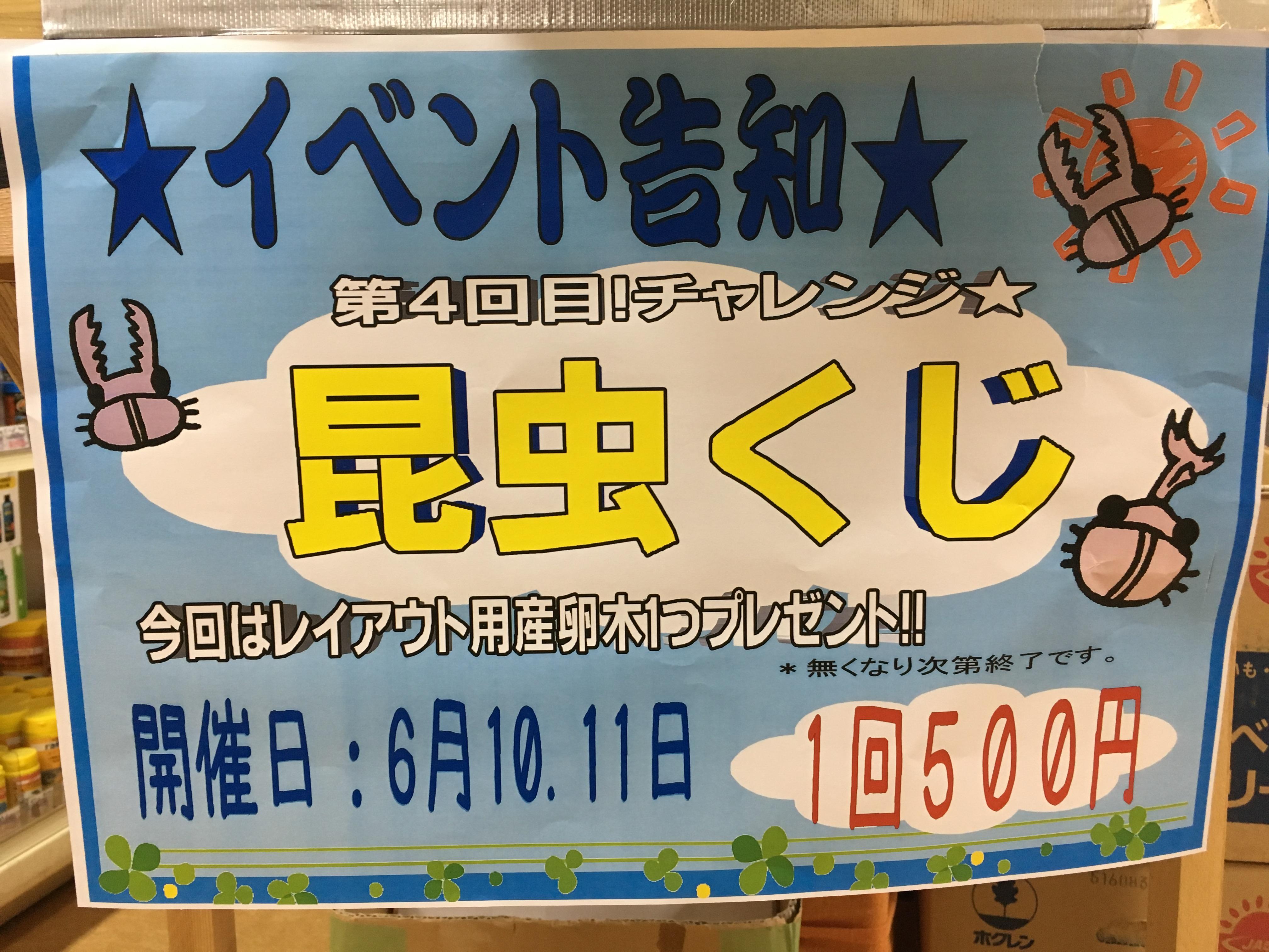 6月10.11日は昆虫クジ第4弾!!@インター小動物