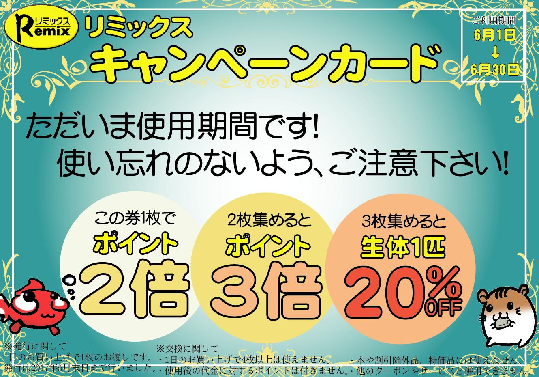 ペポニ@インター店新着生体♪決算バーゲン&キャンペーンカード使用期間もスタート!