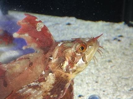 魅惑の冷水魚♪