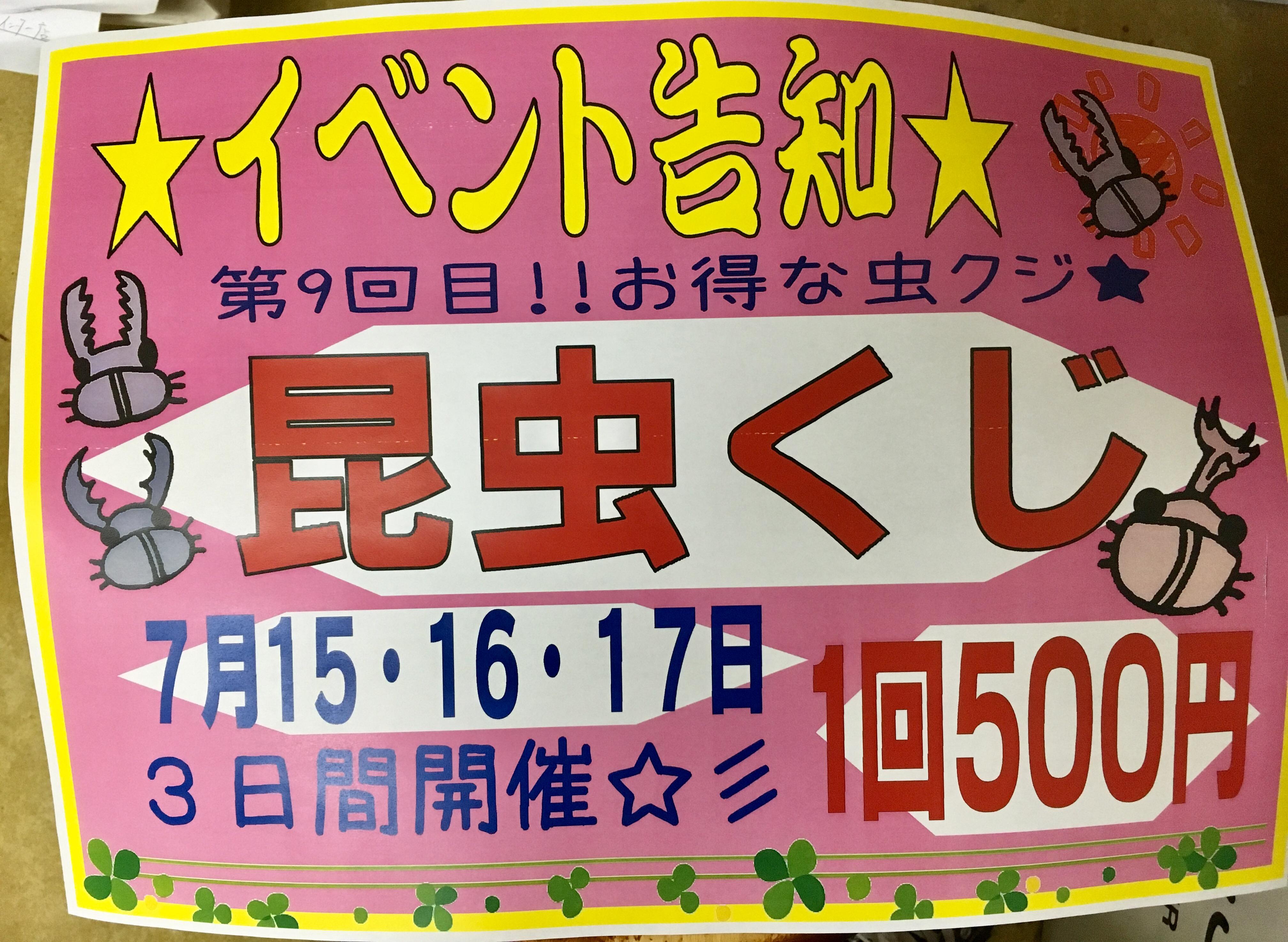7月15・16・17日は昆虫クジで決まり!!!★@インター小動物