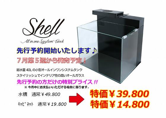 Shell2水槽ご予約承り中(*'∀')