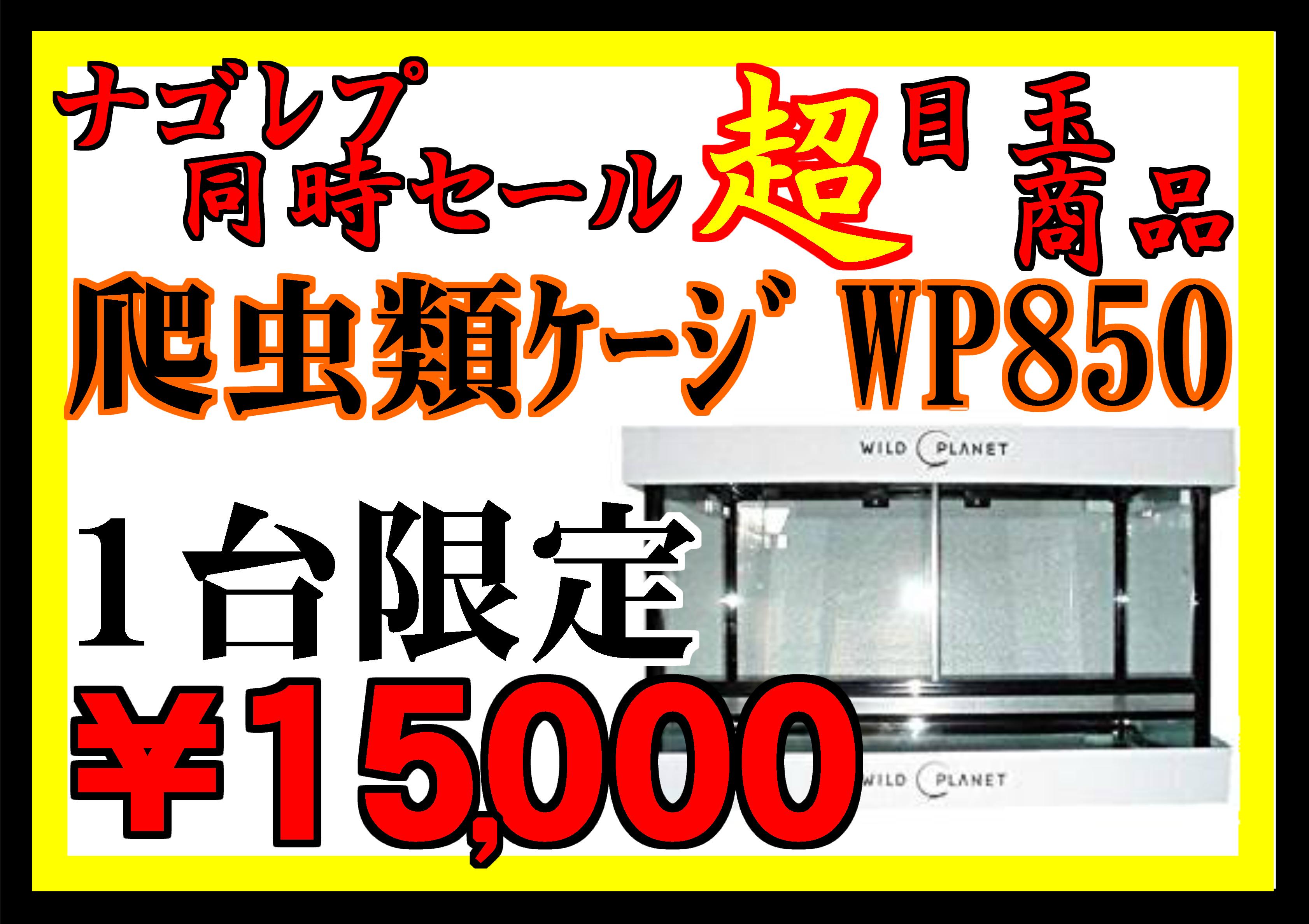 週替り特売は明日から4週目!!!