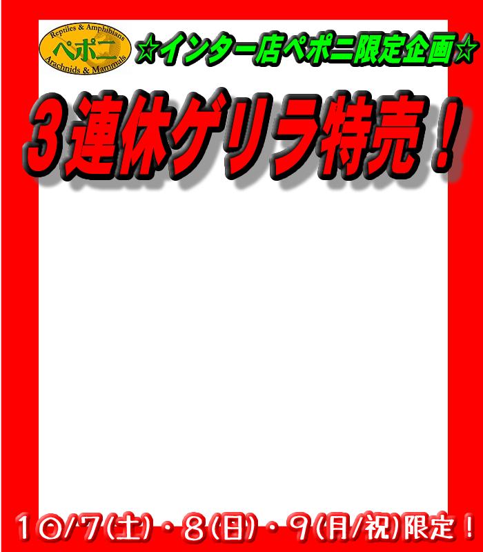 インター店ぺポニ限定!!『3連休ゲリラ特売』@インター爬虫類
