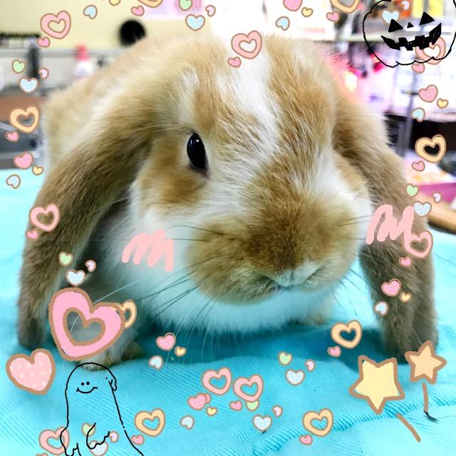 大なり小なりウサギなり~☆彡@インター小動物