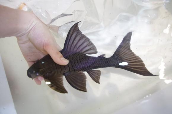 mozo熱帯魚イベントの告知