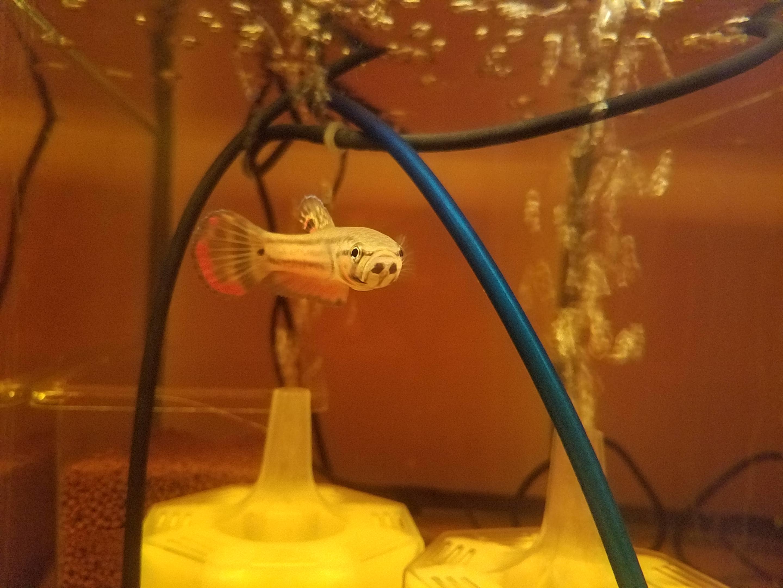 今週の新入荷 mozo熱帯魚