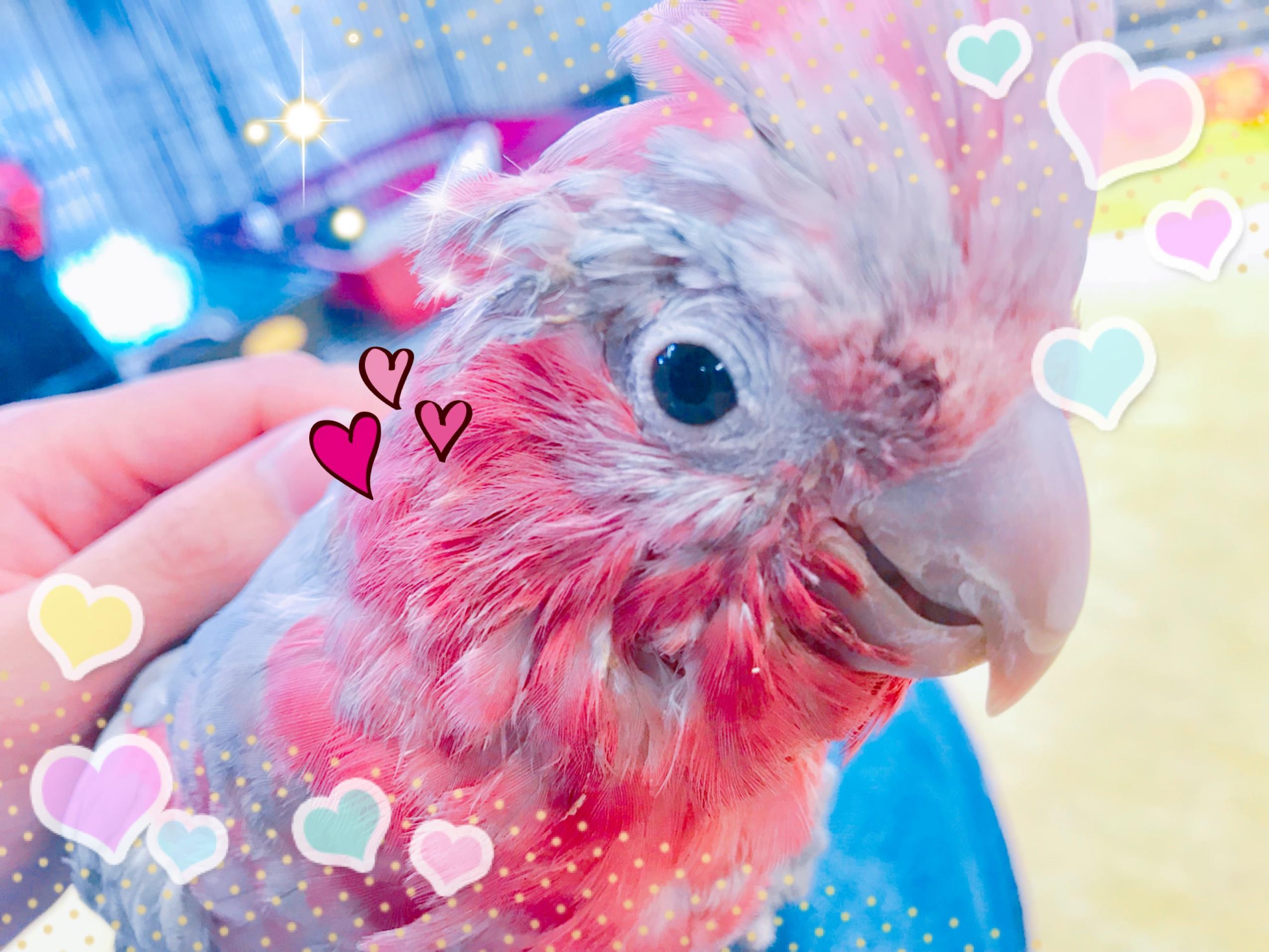 ピンク色の天使♡♡ラブリーモモちゃん襲来だぁぁぁあああ!!!!!@インター小動物
