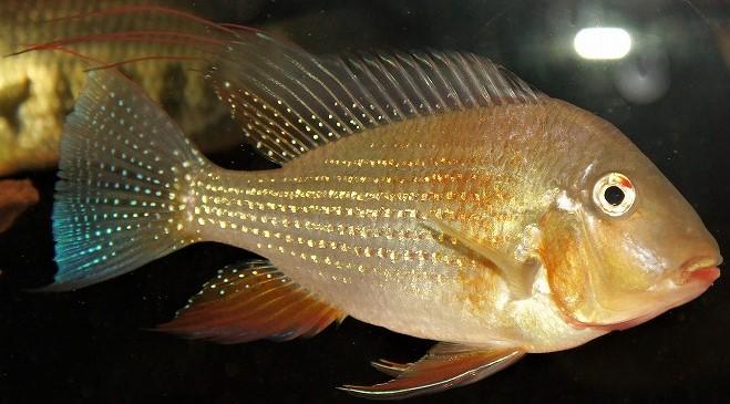 金魚のほうが一息付いたので熱帯魚をアップ!