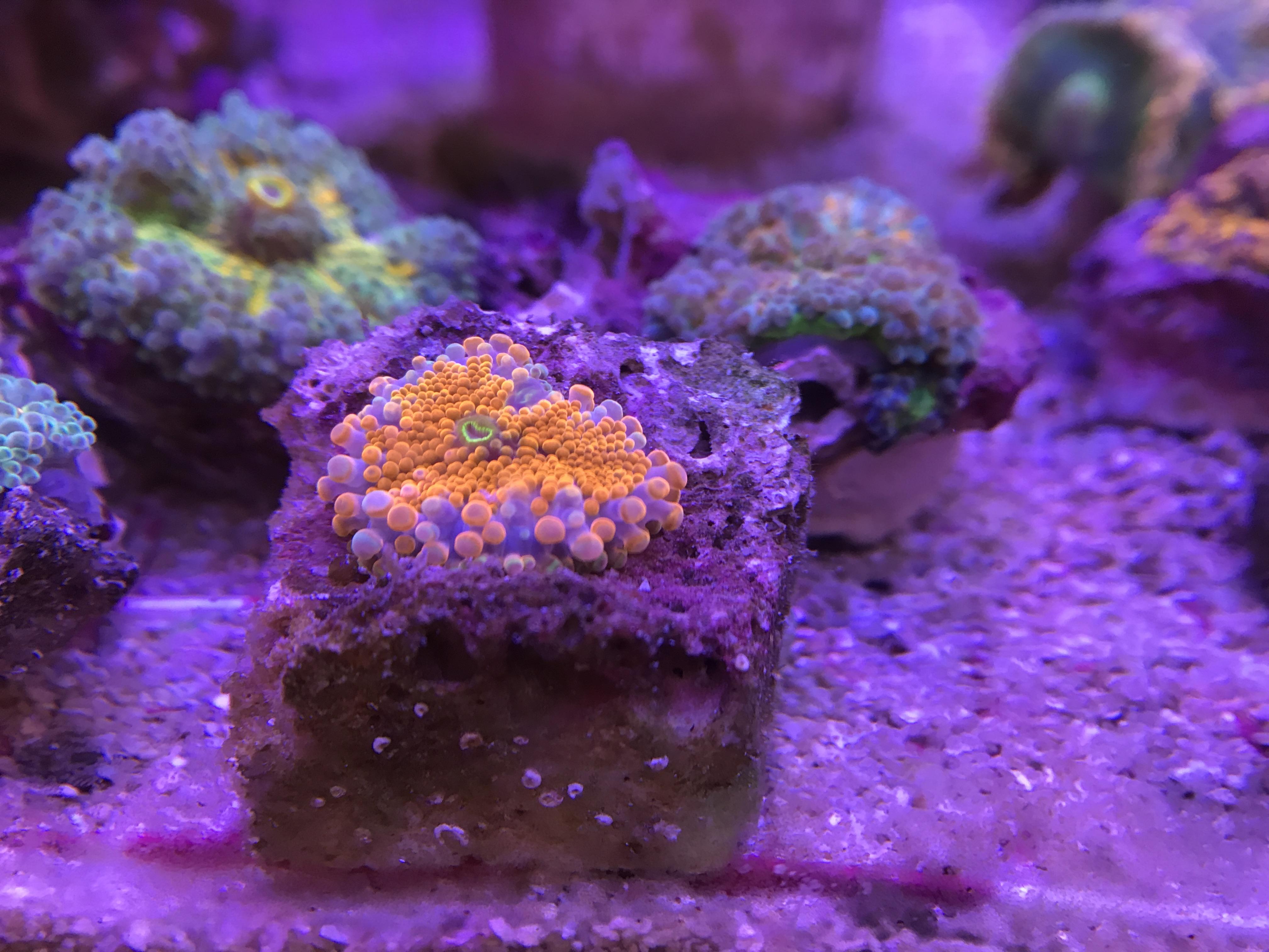 サンゴ買い付け便