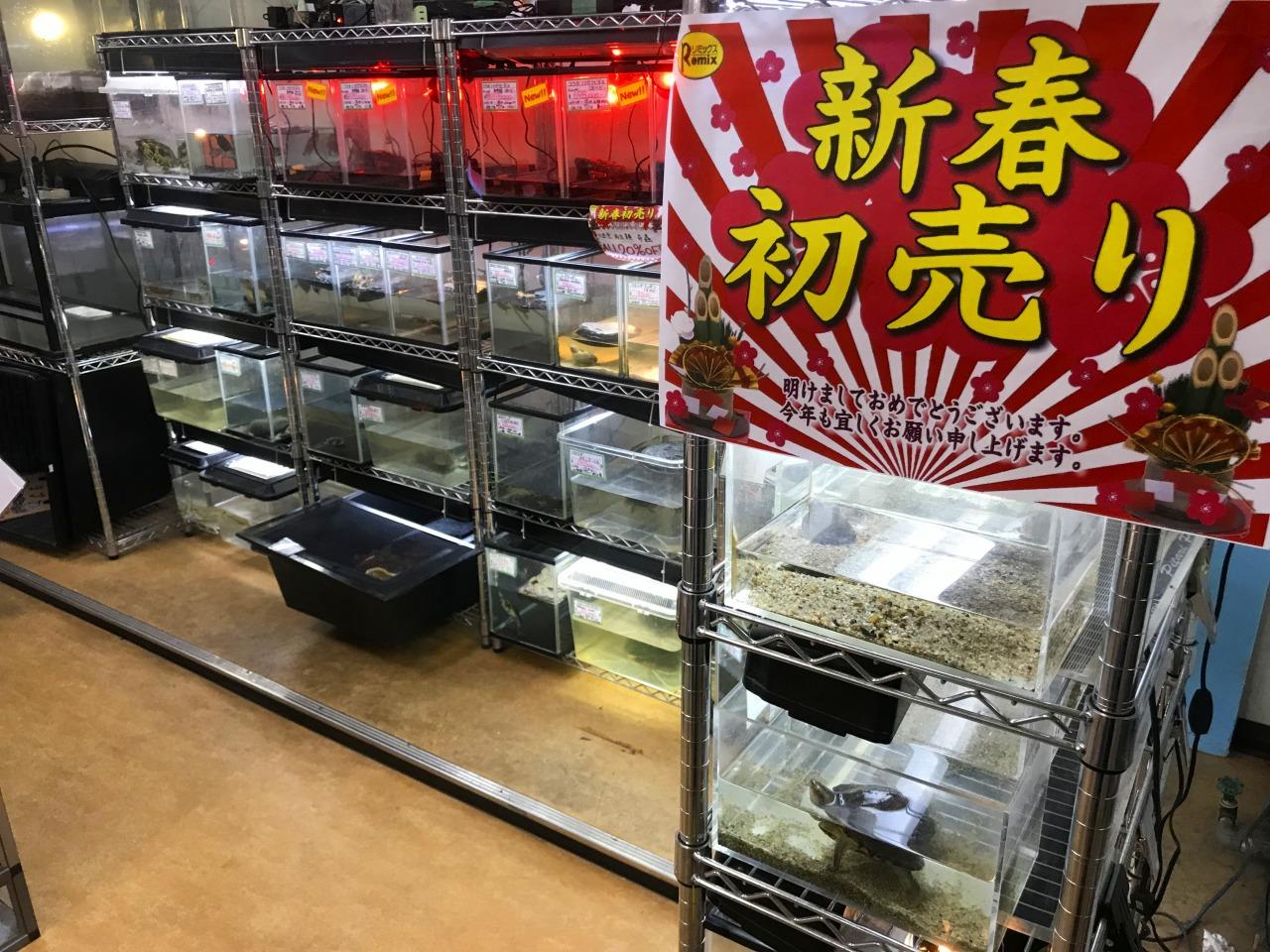 新春初売り本日5日め!ペポニ@インター店!12-20時オープンです♪