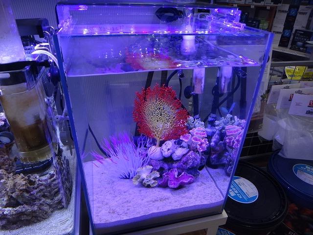 お勧め海水魚セット♪♪