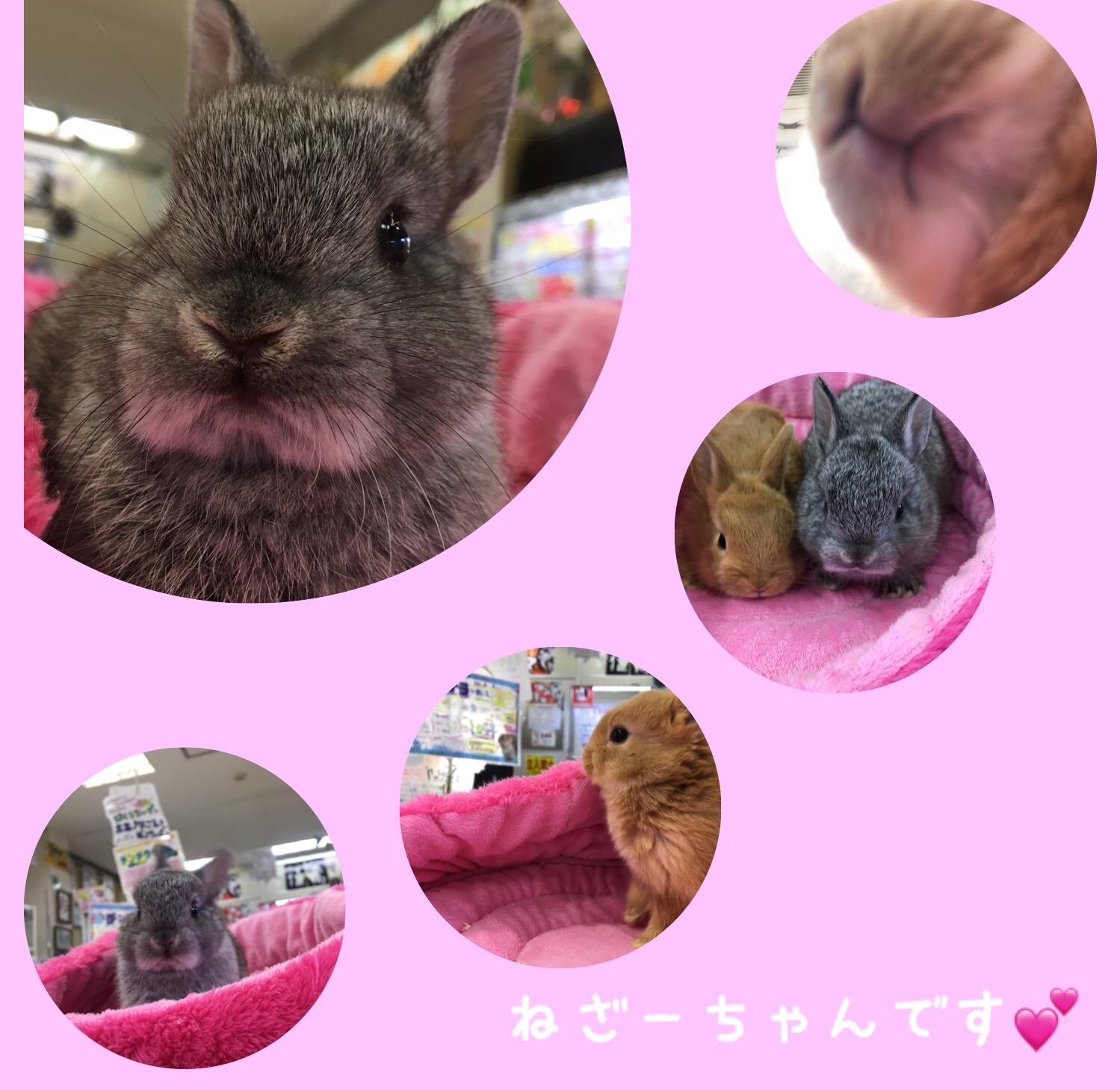 きゅ〜〜となウサちゃん来ました!@インター小動物