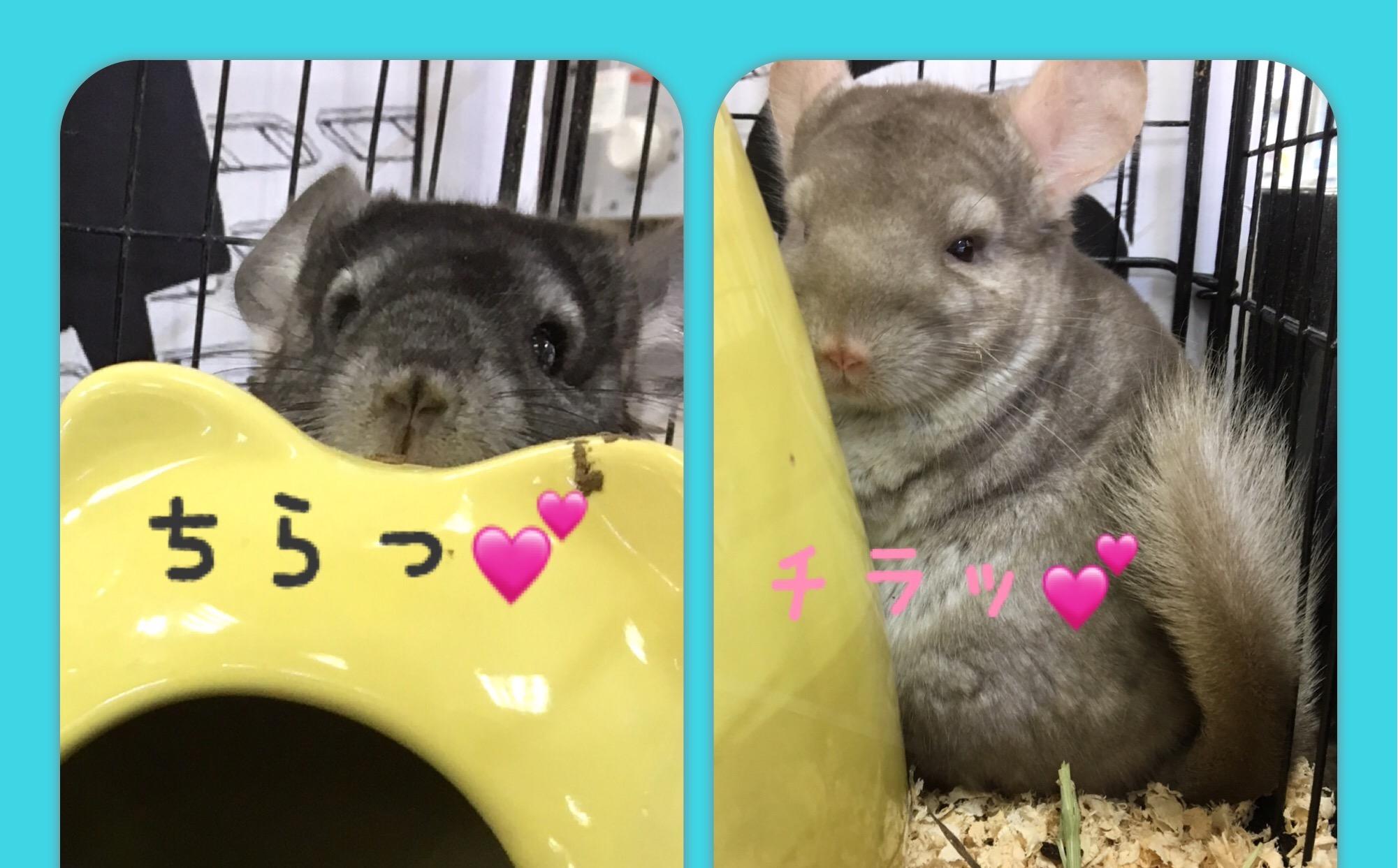 【インター小動物】モフみ強めです♡part①