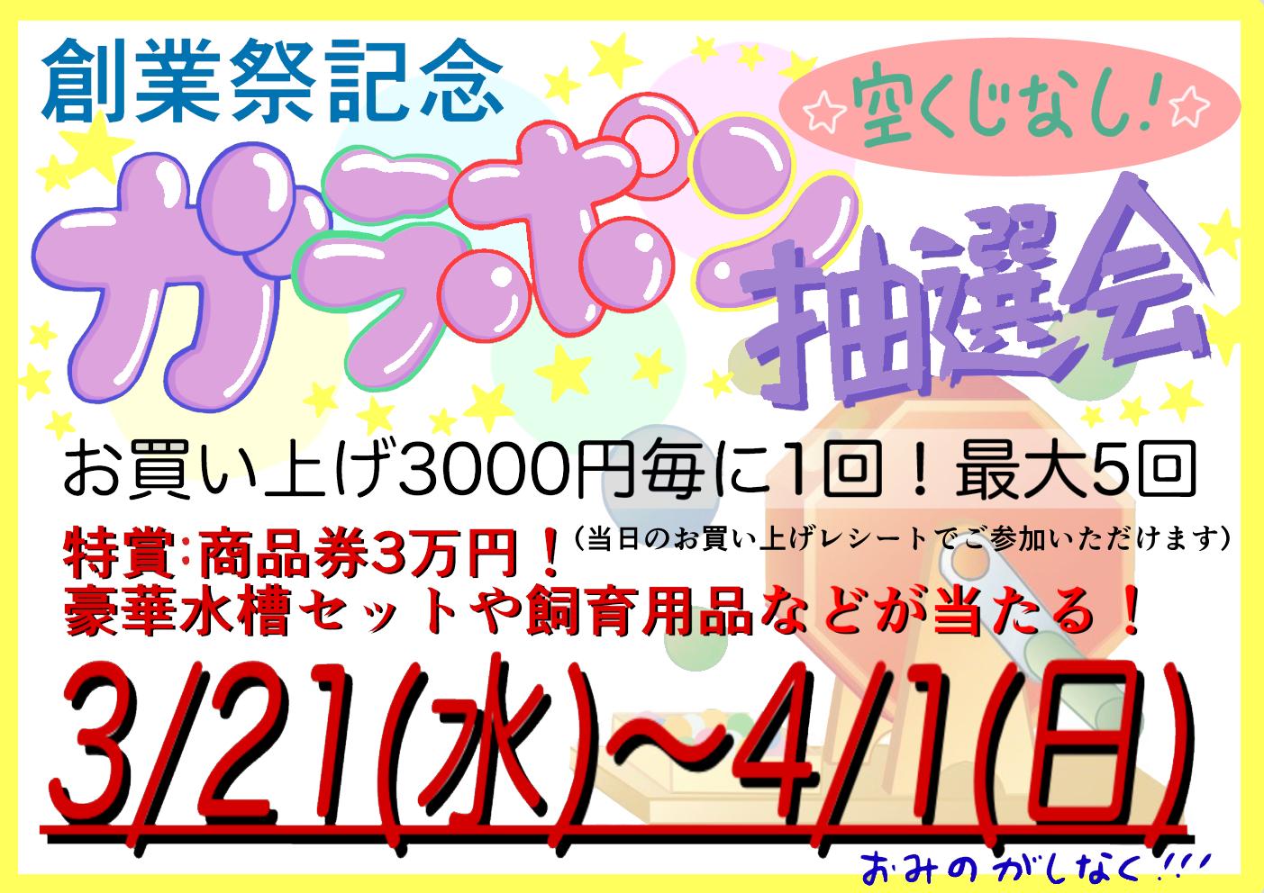 創業祭恒例!ガラポン! 3/21(水/祝)よりスタート!!