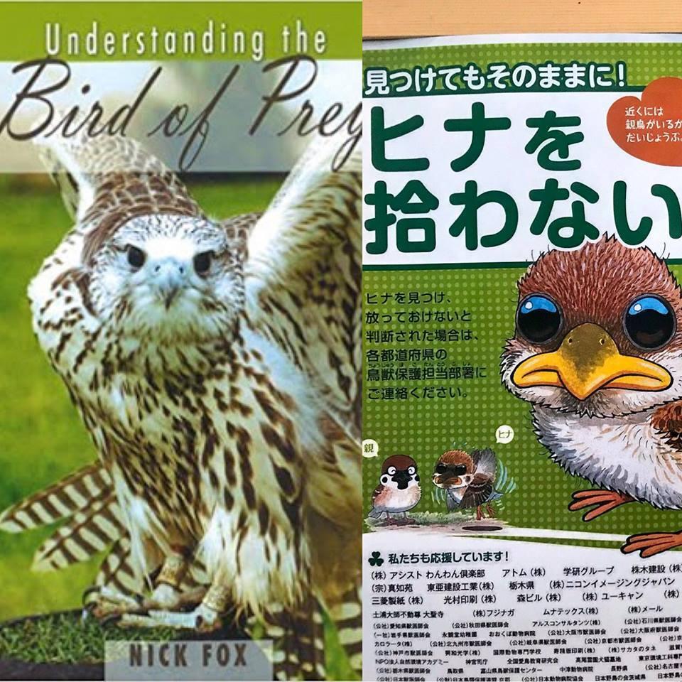 世界最高峰の鷹狩本日本語クラウドファンディングと野鳥のヒナを拾わないで、のお知らせ。