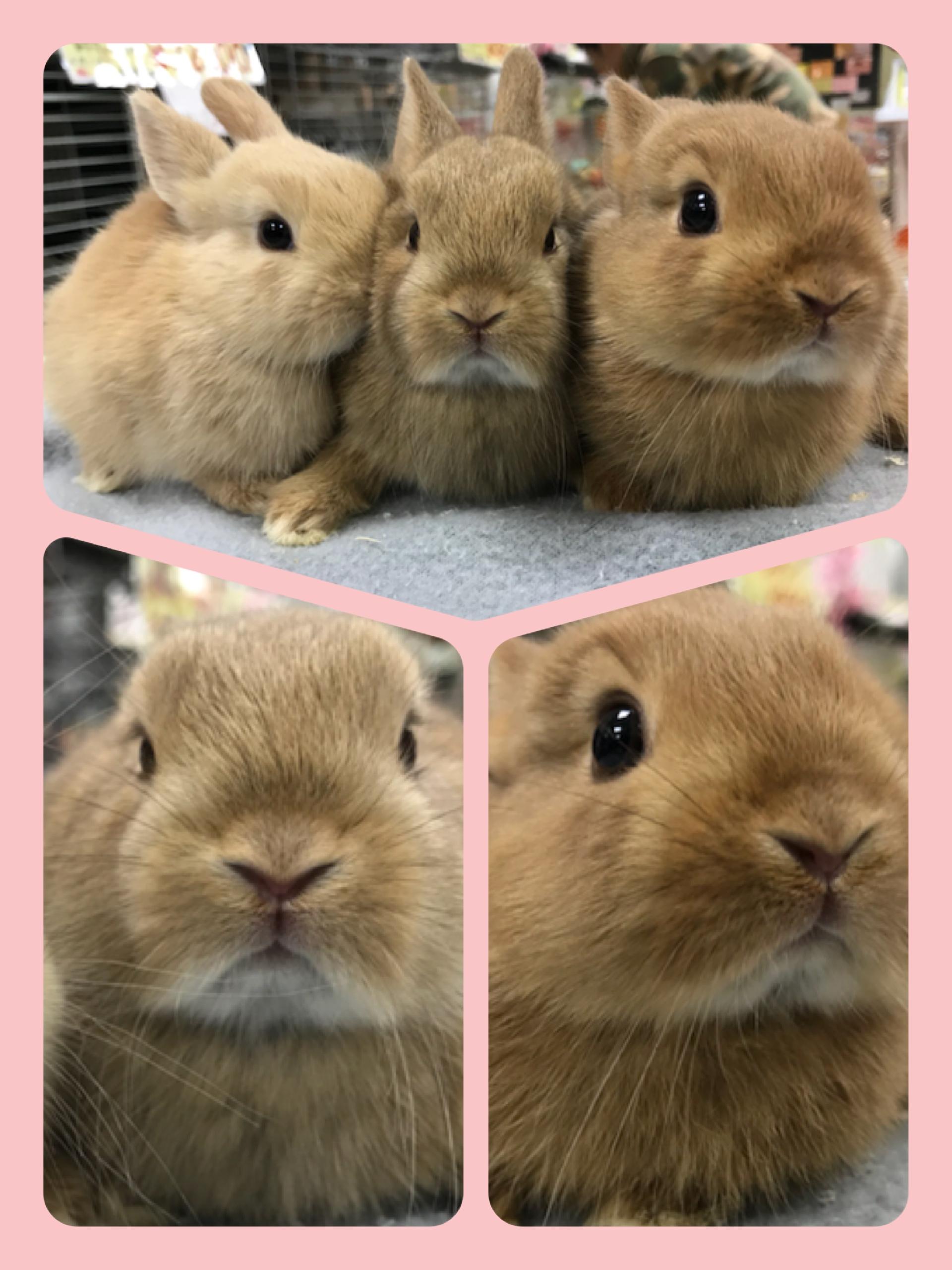 【インター小動物】春の陽気に誘われて、、、ラビラビBABY追加入荷ッ(´ω`)+α