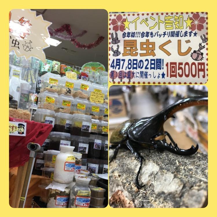 【インター小動物】昆虫クジは明日まで!!