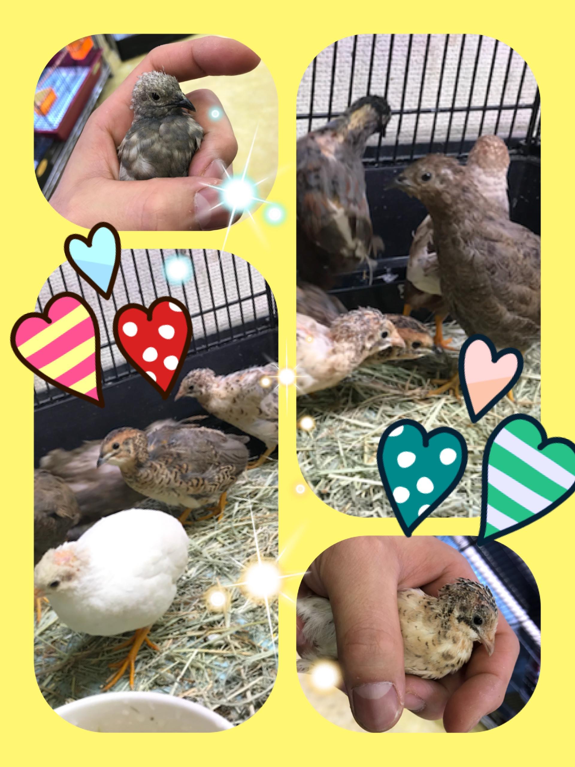 【インター小動物】新着鳥類が止まらない!!w家禽&水禽編☆彡