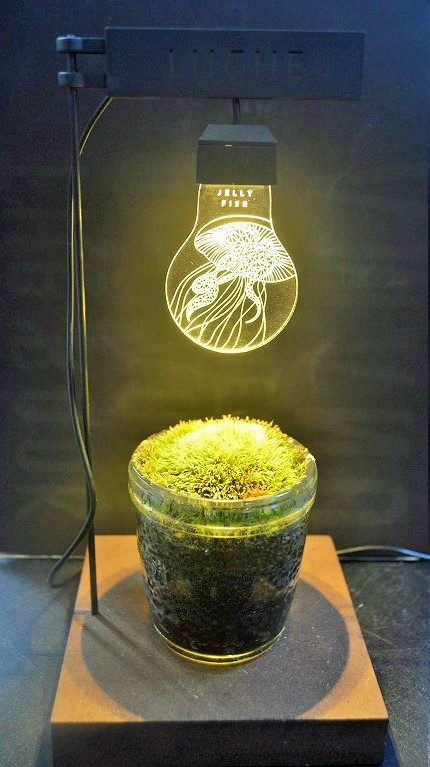 LUCHE!新しい卓上植物用ライト!