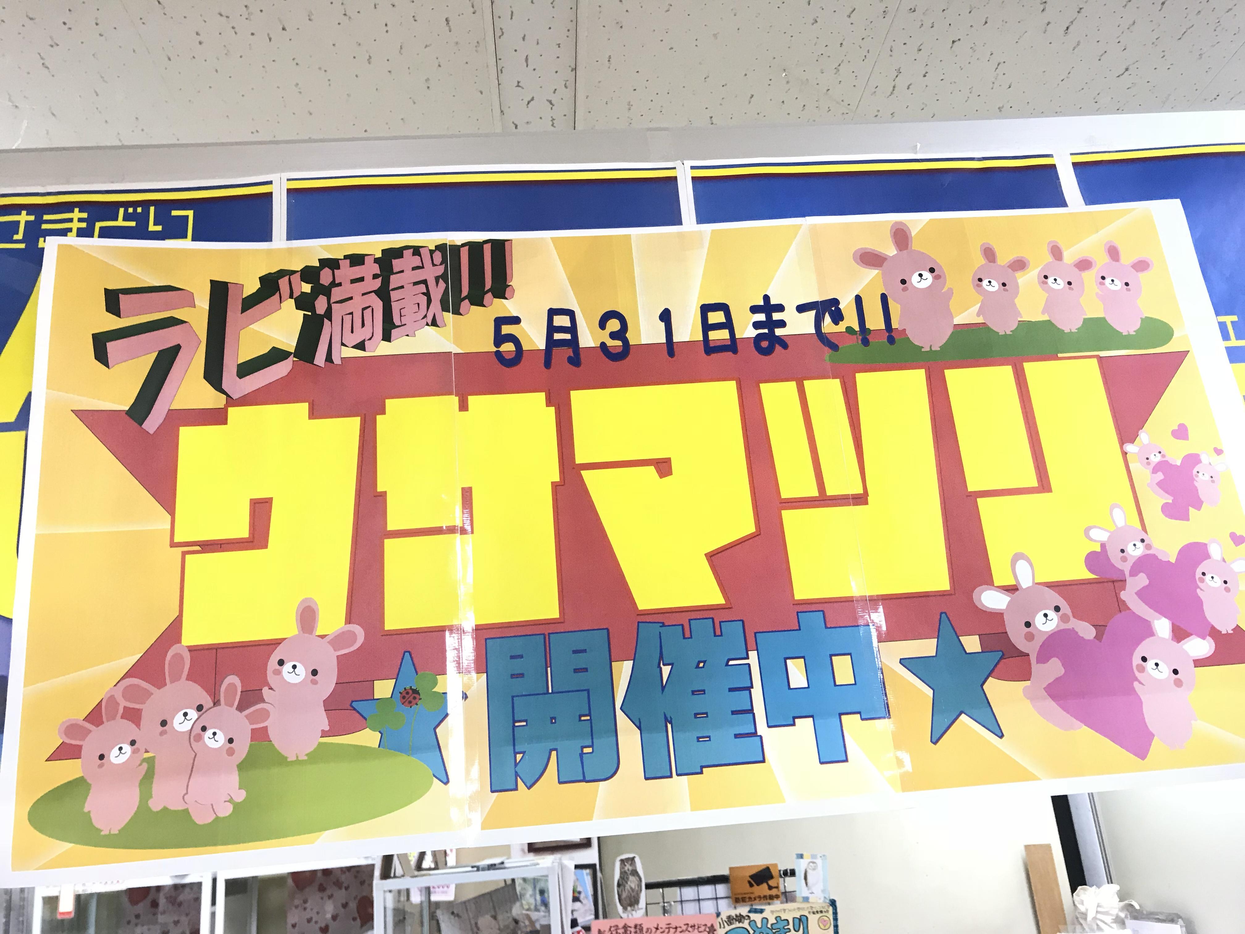 【インター小動物】大好評!!ウサ祭り開催中〜(*´꒳`*)♪可愛いベビベビちゃんがいっぱいです♪