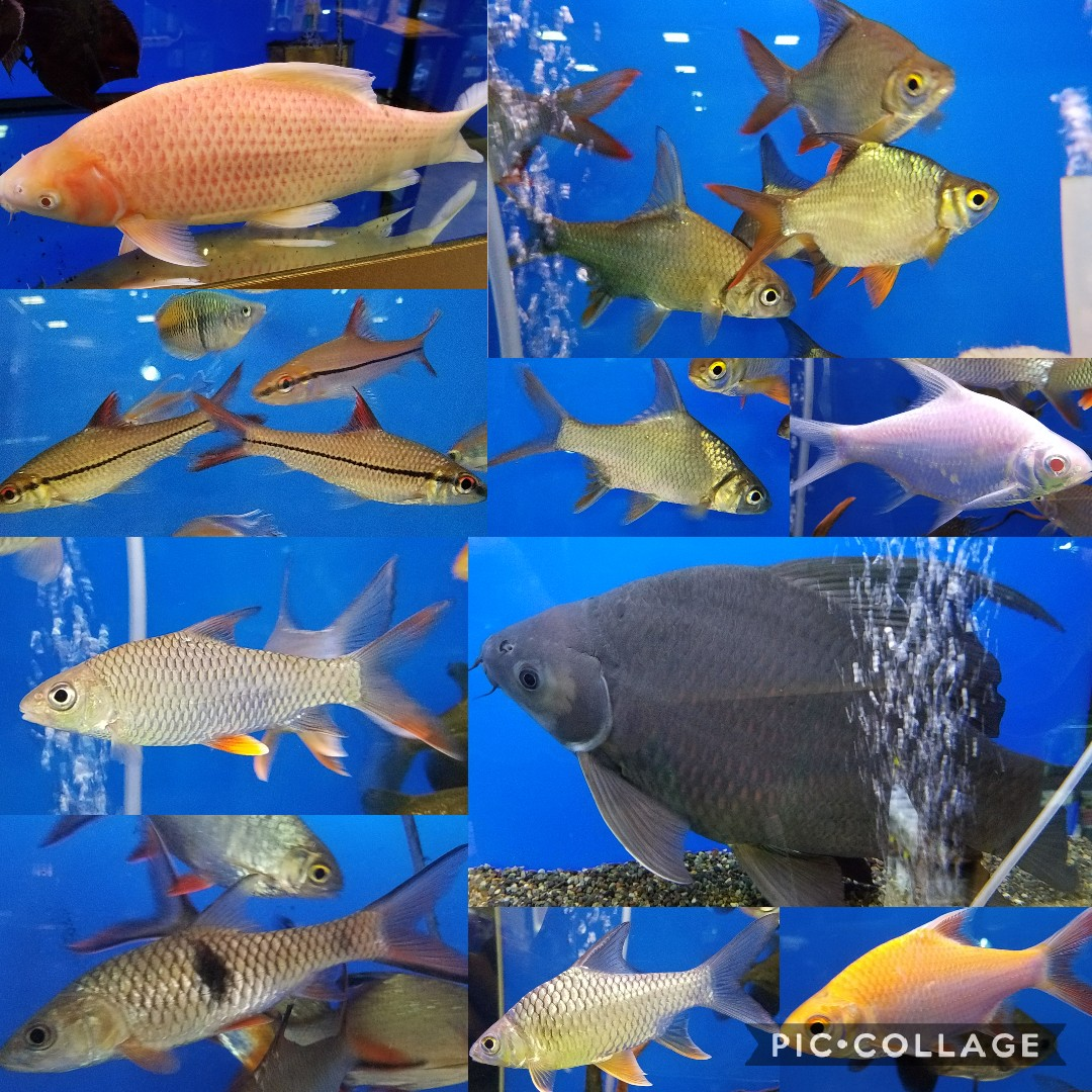 バルブの薦め mozo熱帯魚