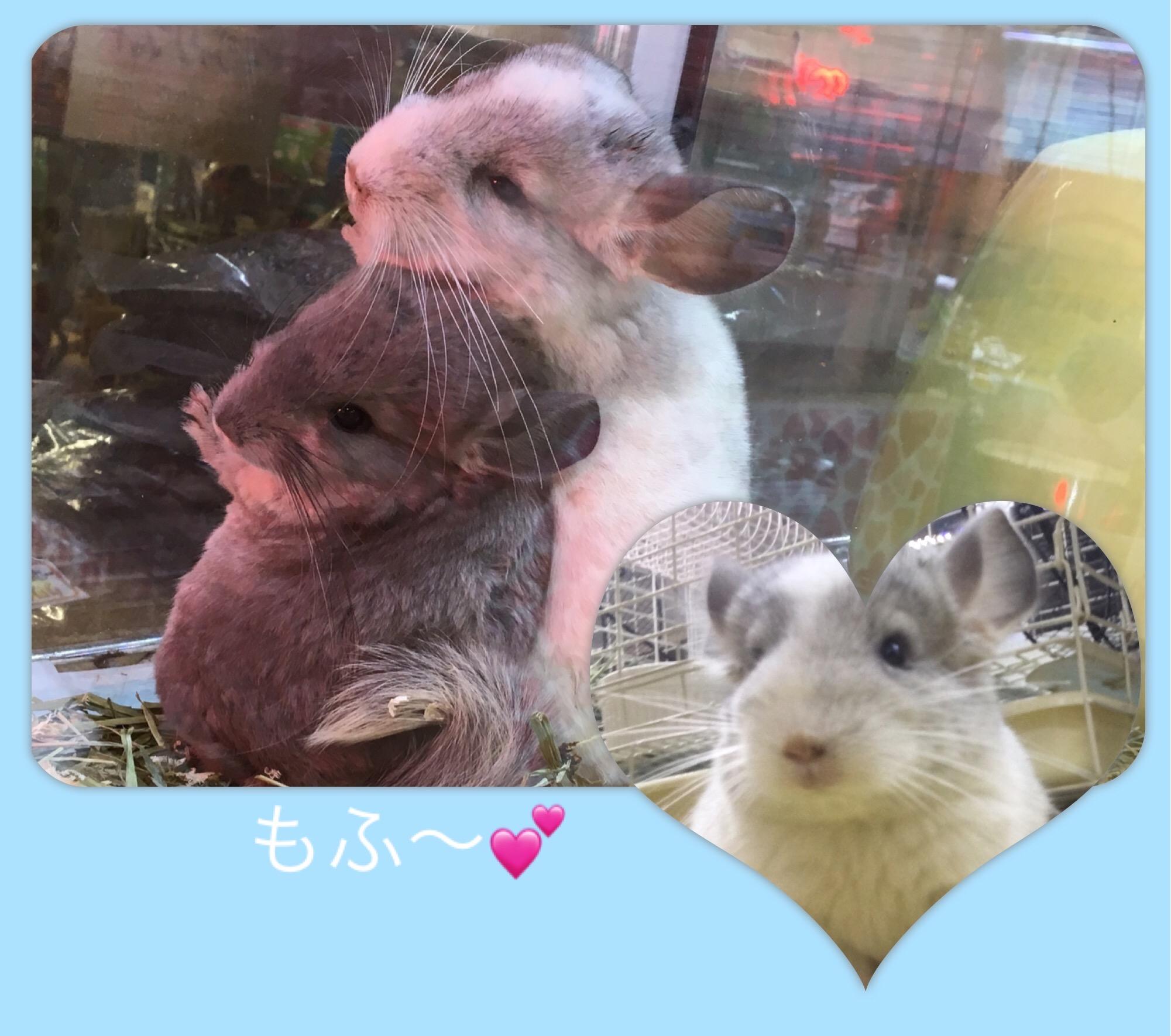【 インター小動物 】キマシタ!!!!待望のもふBABY!!!!