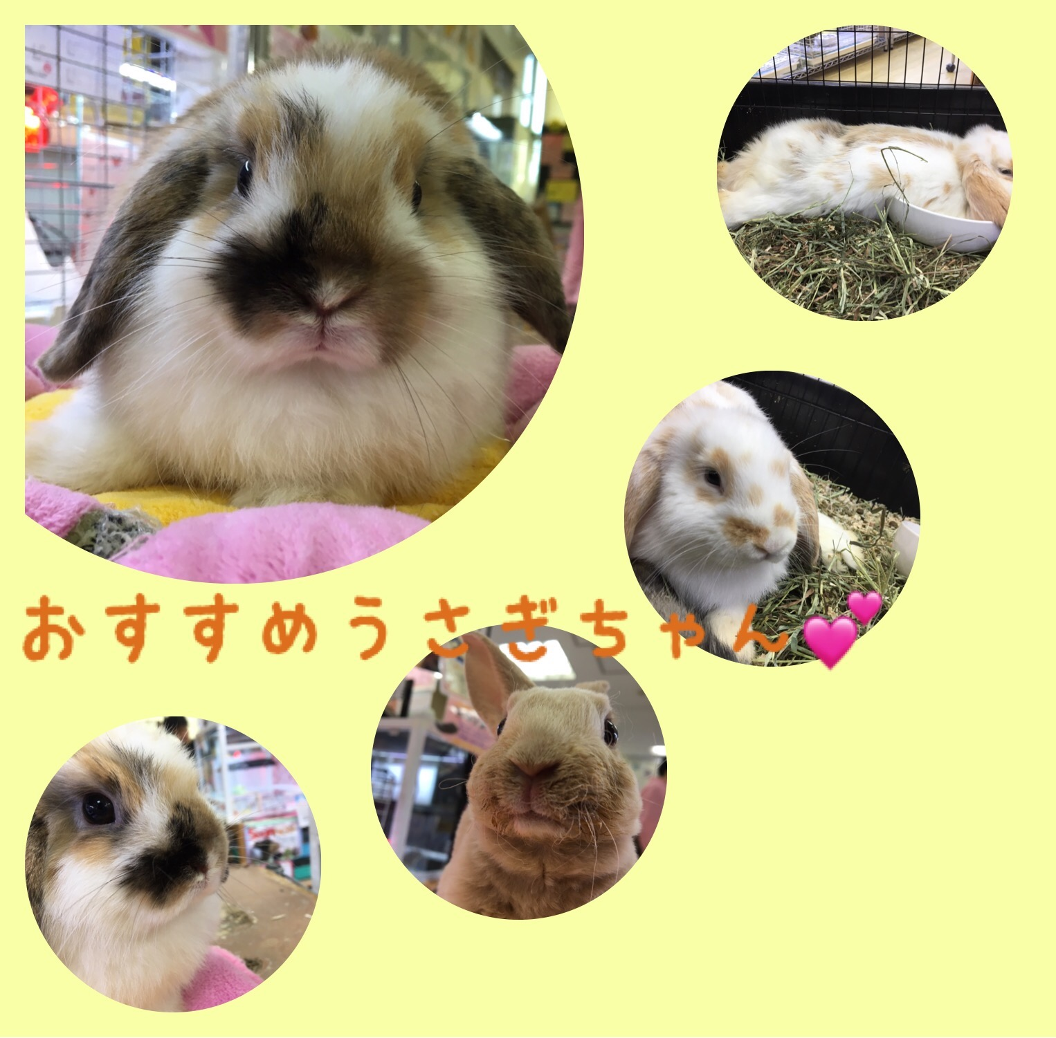 【 インター小動物 】うさうさ紹介!!!