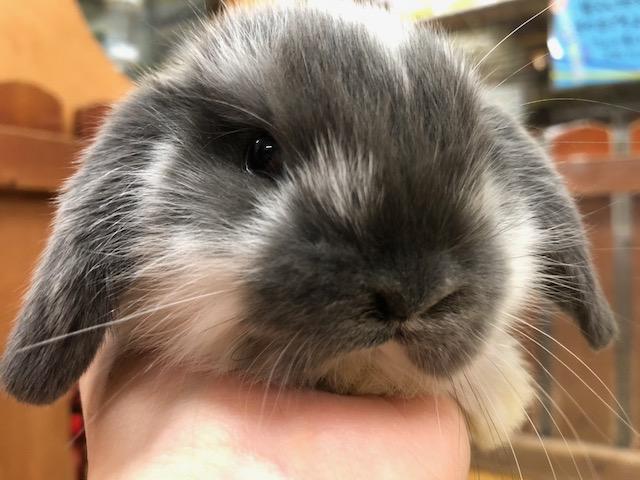 【mozoペポニ】土日特価はウサギ祭り!