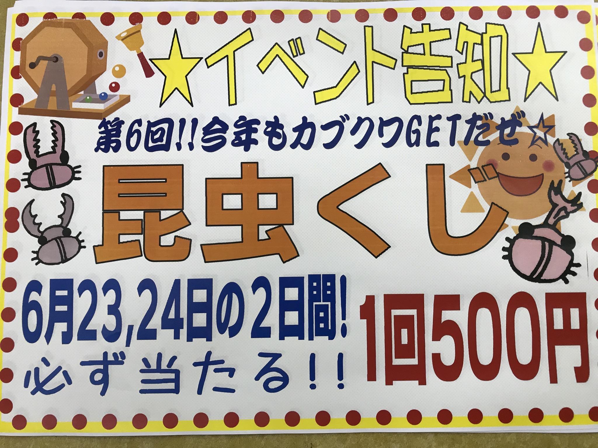 【インター小動物】今週末は「昆虫くじ」開催しまっす!!!