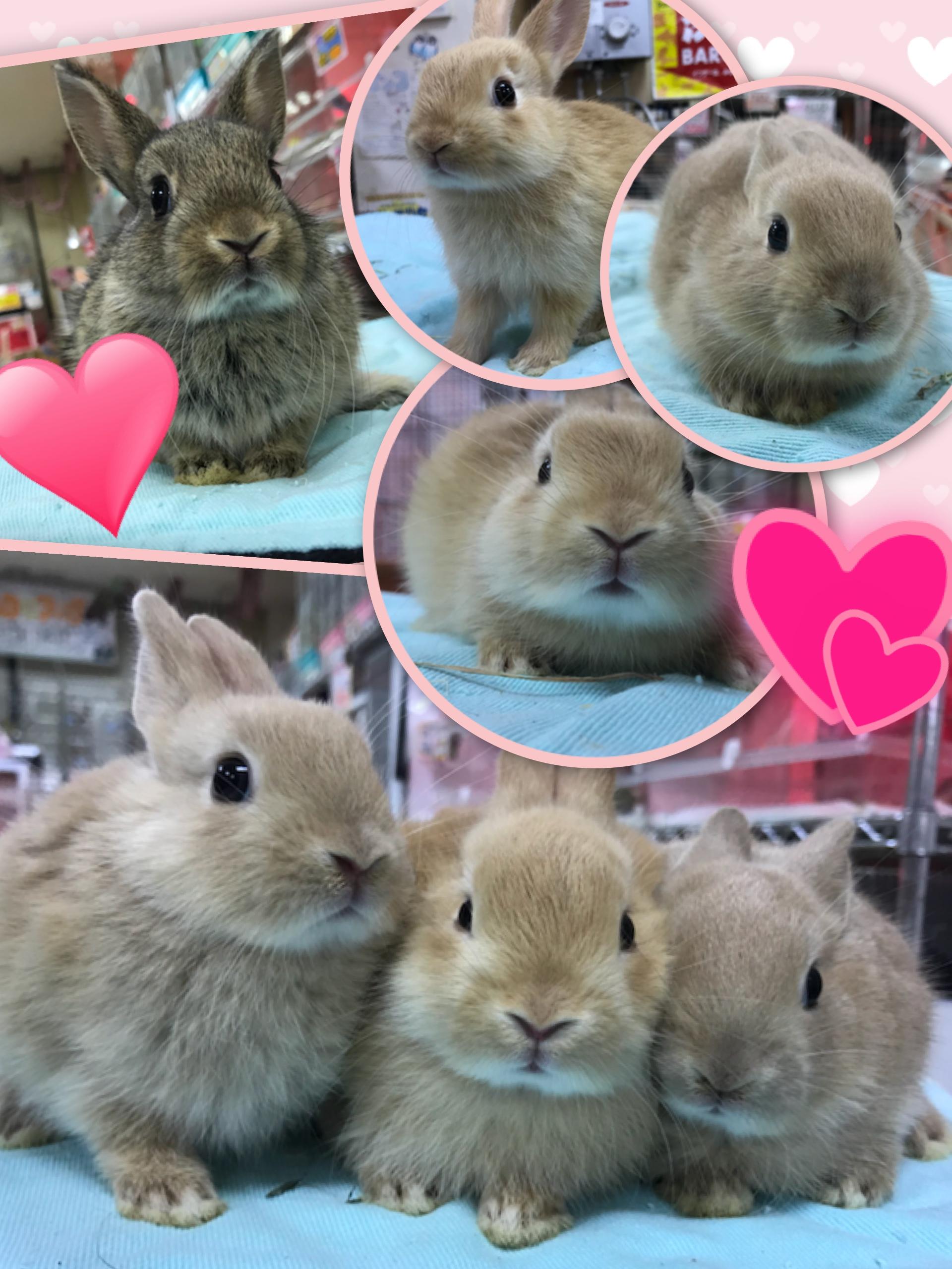【インター小動物】MINIなミニは最強に可愛い!に決まっている(*´з`)♪PART1