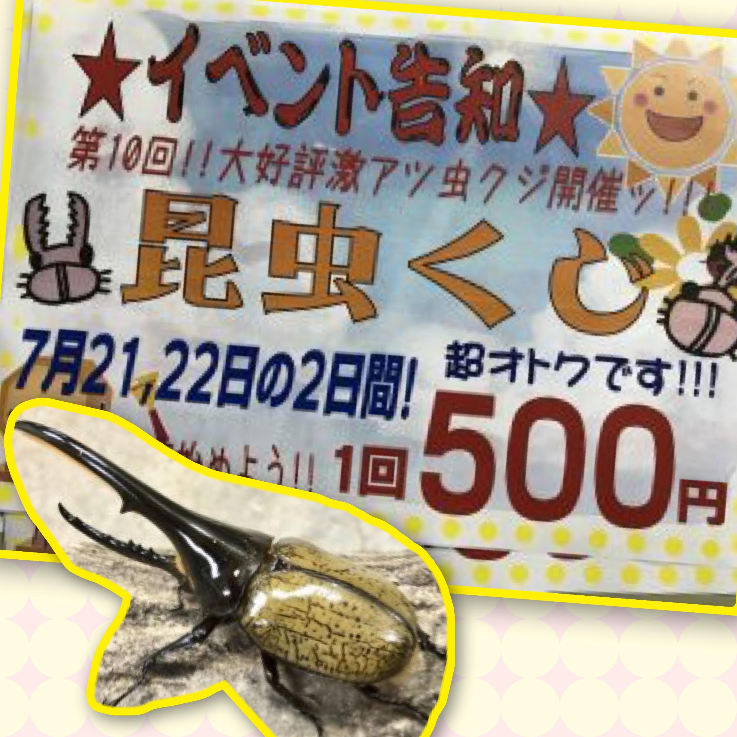 【インター小動物】昆虫クジは明日、日曜日まで!!そして、カブクワの入荷は続く、、、