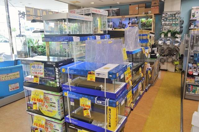 決算SALE!はじめよう熱帯魚飼育!