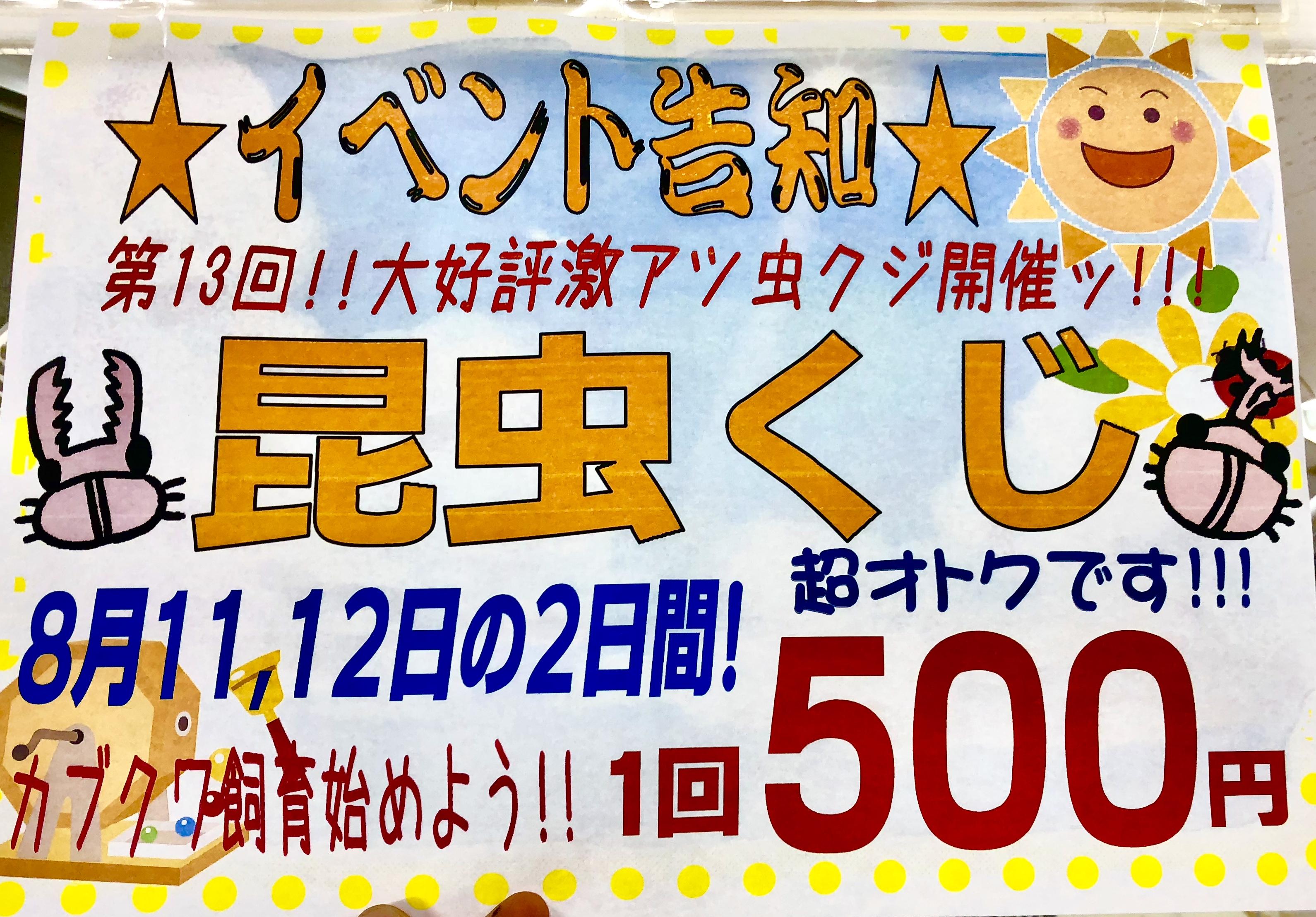 【インター小動物】週末は昆虫クジ!お盆休みオオクワSP☆