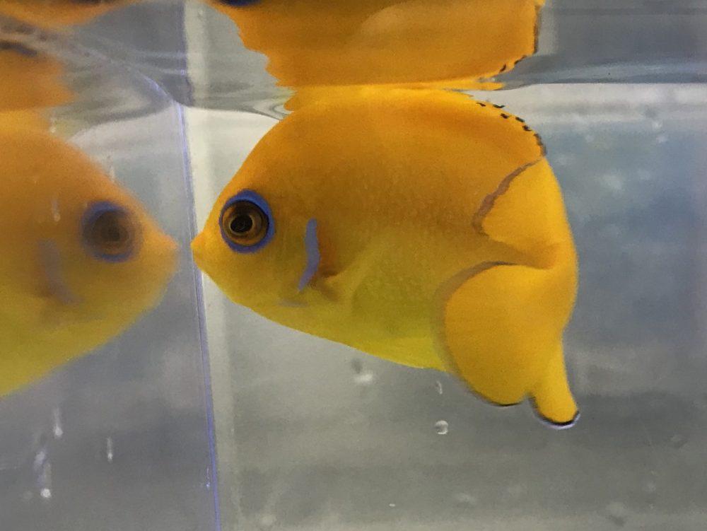 安定の美魚!