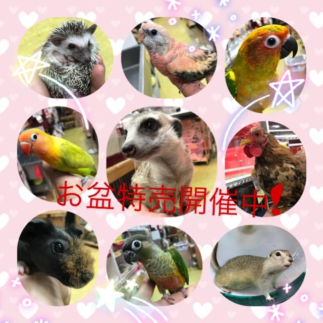 【インター小動物】衝撃のプライス多数!お盆特売は16日まで!!!!