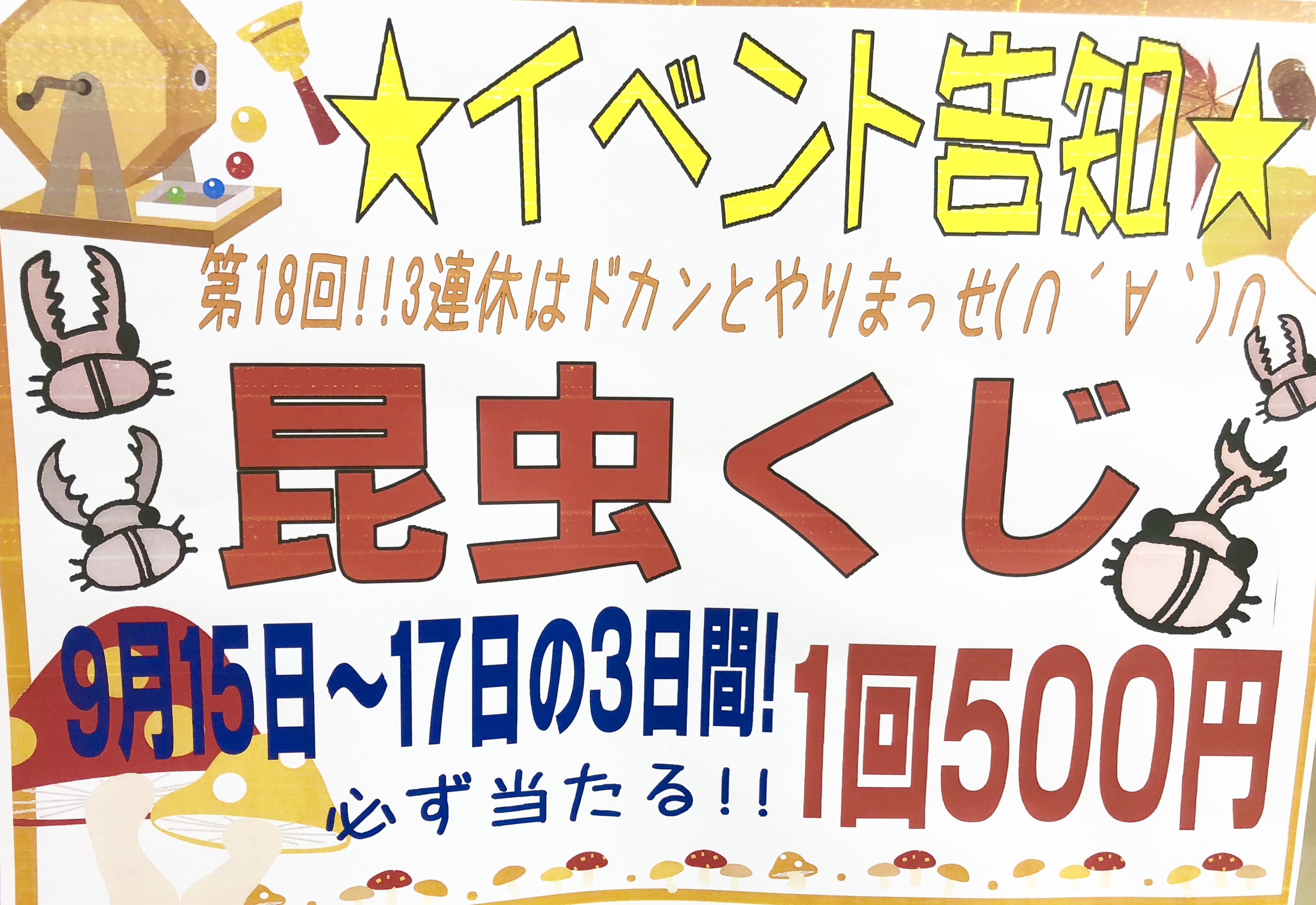 【インター小動物】ワイルドオオヒラタ着弾☆週末三連休は昆虫クジも!
