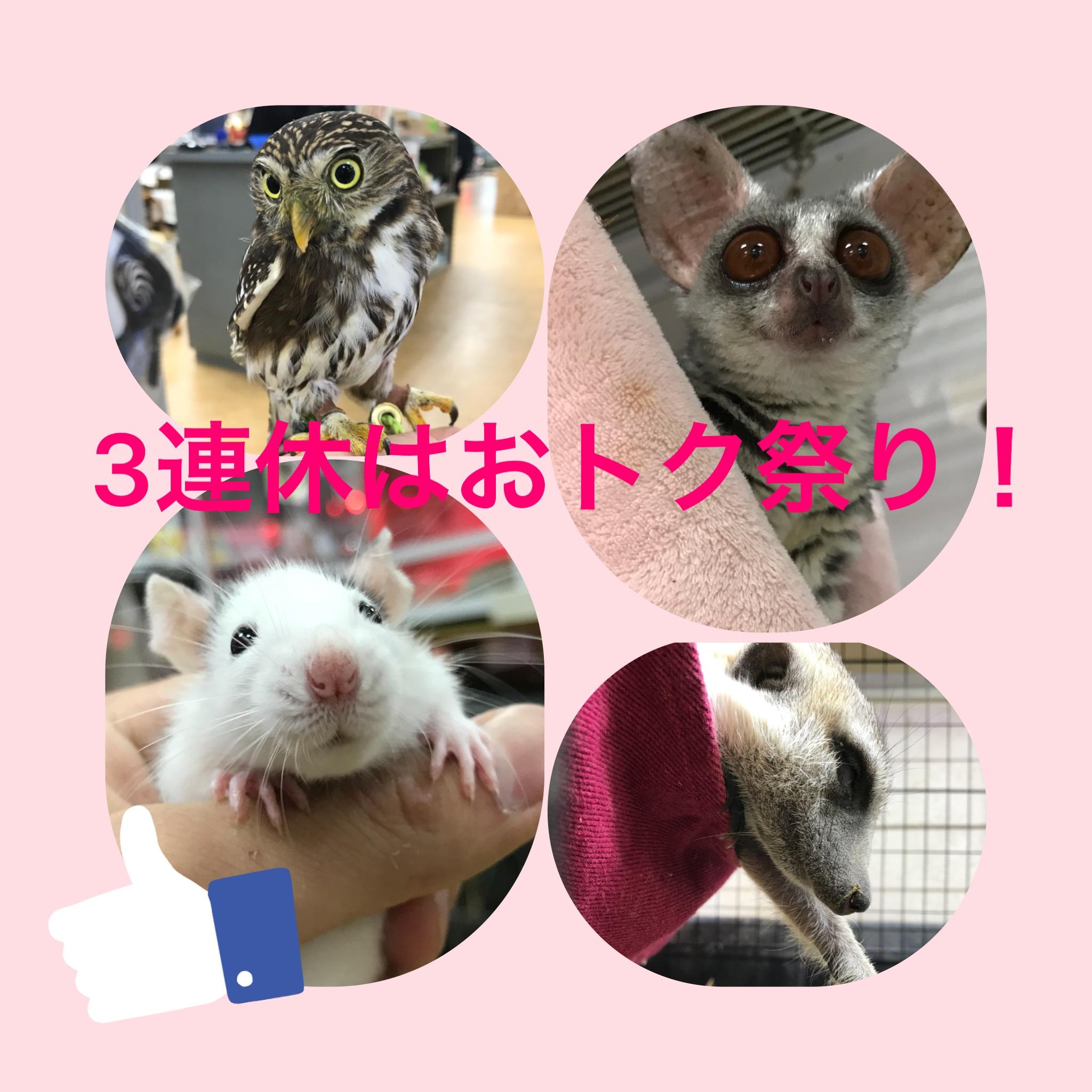 【インター小動物】3連休は激アツ運転でございまする~(∩´∀`)∩特売のご案内祭り!!