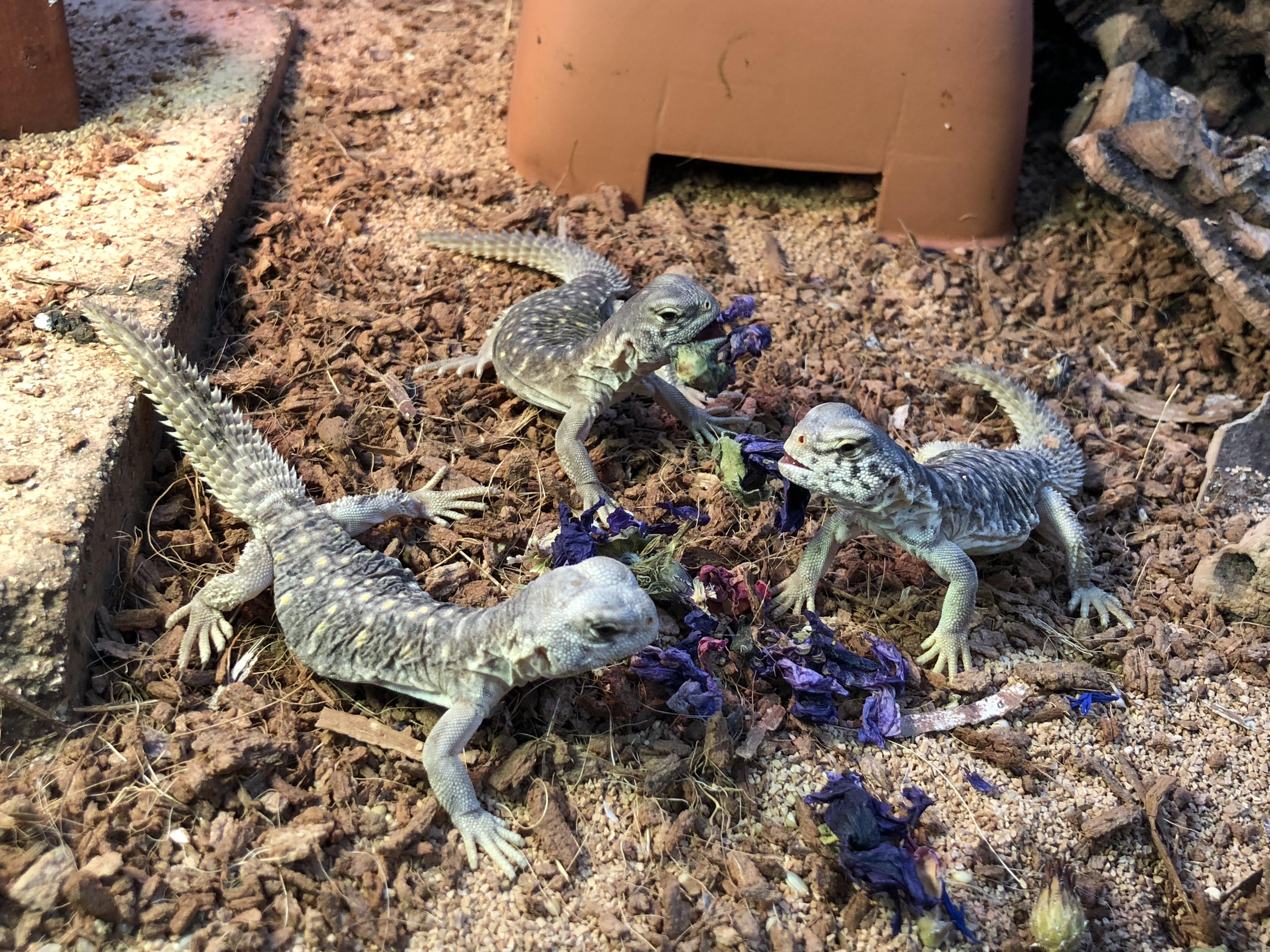 蜥蜴と陸亀大量入荷!!