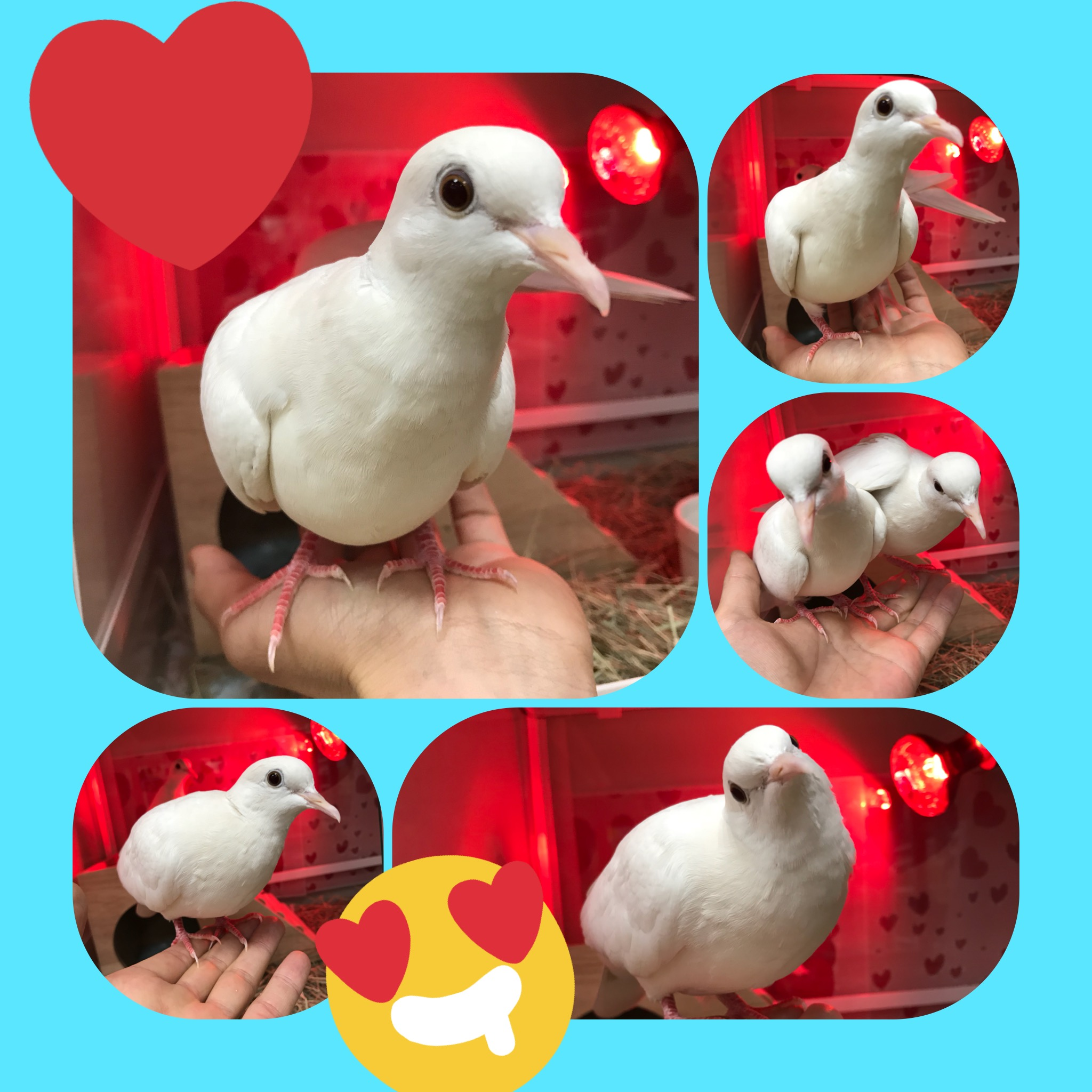 【インター小動物】ぽっぽっぽー鳩いっぱーい♪( *´艸`)