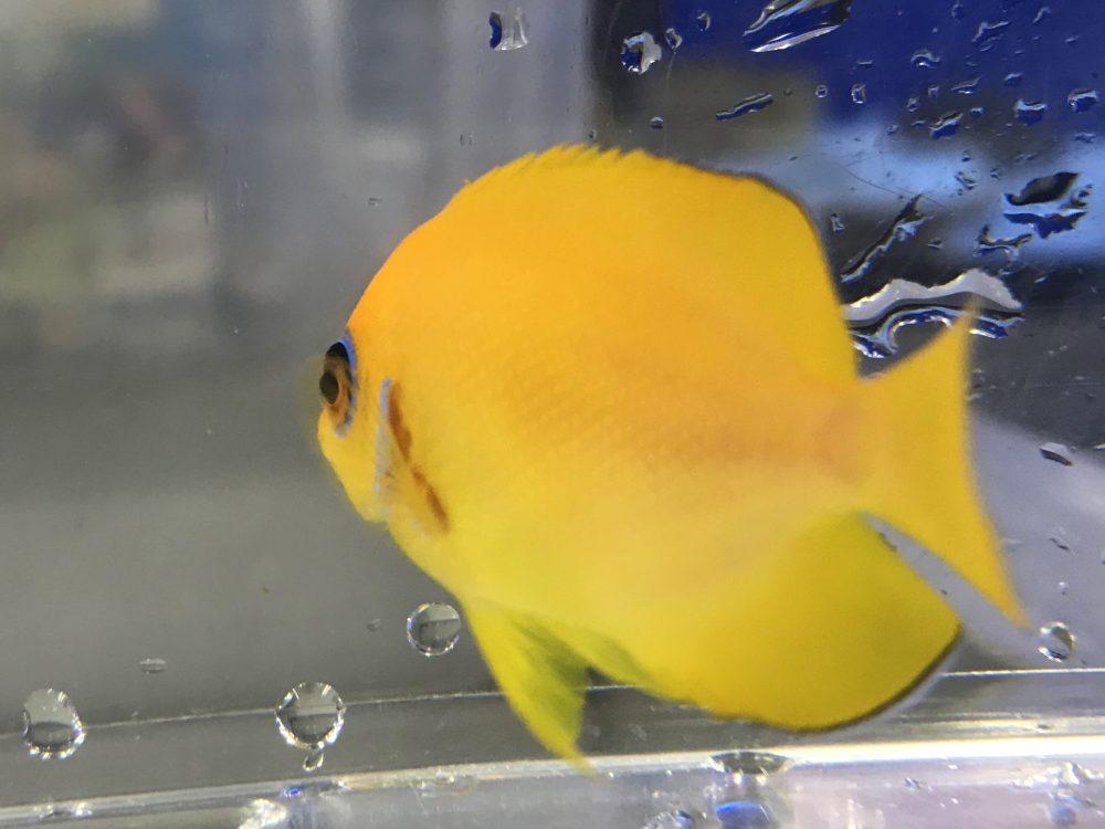 いつ見ても綺麗な黄色
