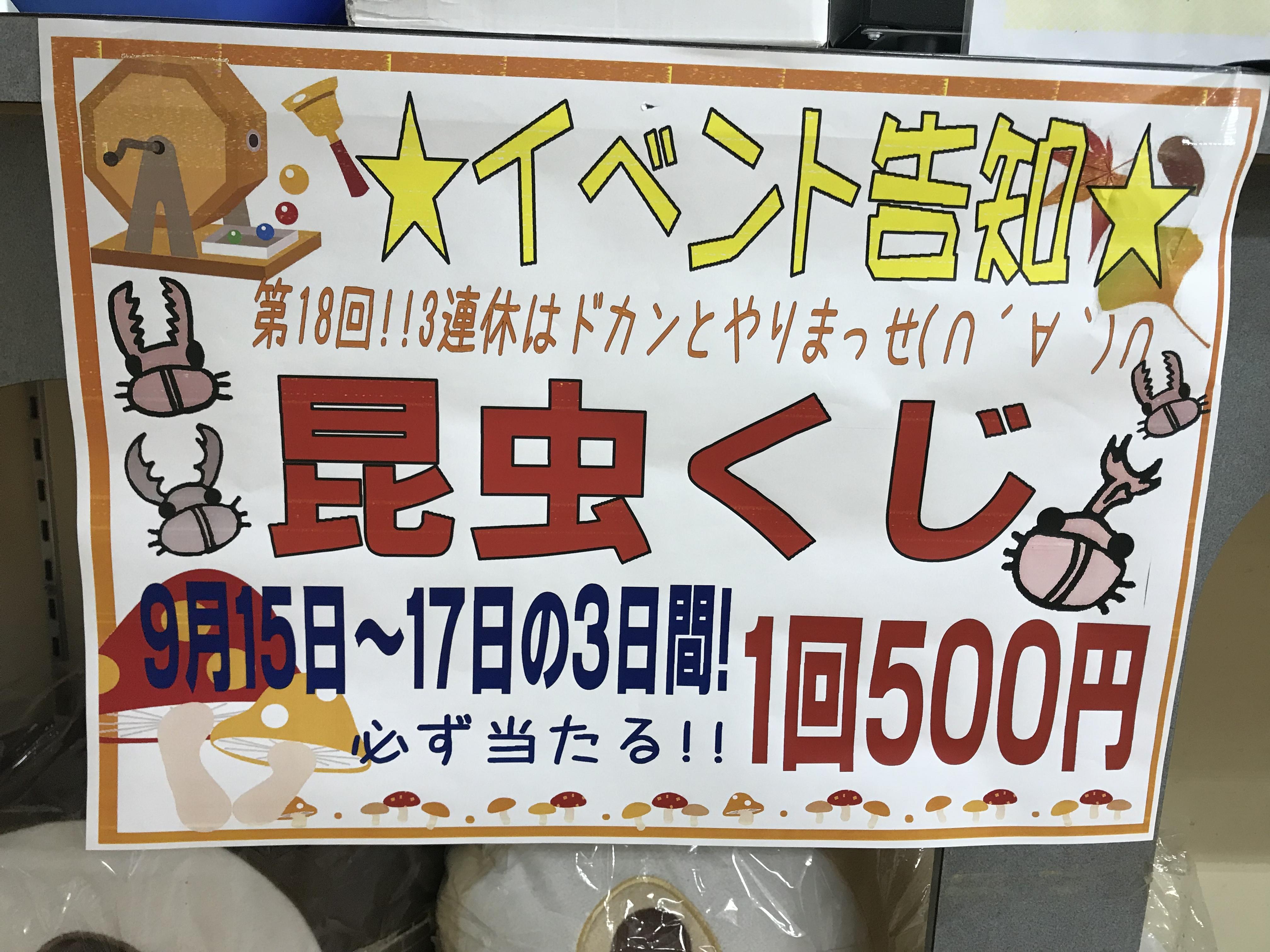 【インター小動物】明日も開催!!昆虫くじ!!人気のカブクワをGETしよう!!