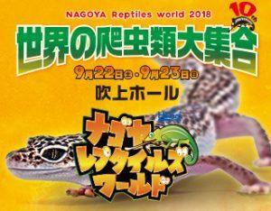 【インター小動物】ついに明日!!ナゴレプ開催〜〜〜!!!って事は、、、