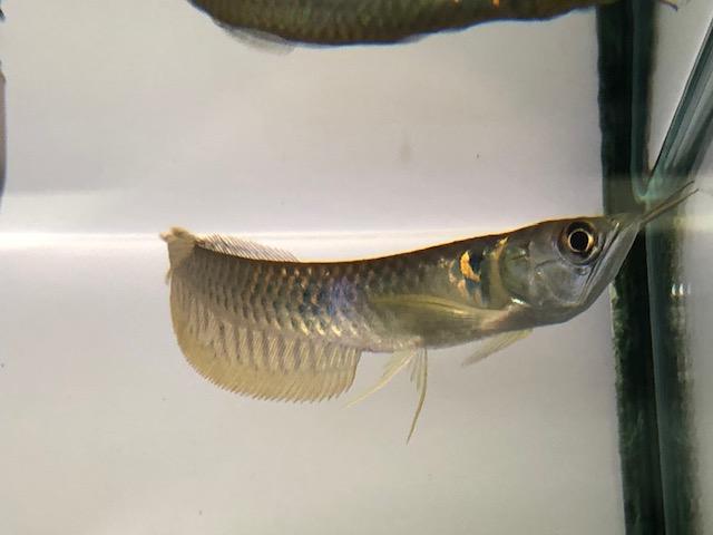 本日は小さめサイズの魚のご案内です。