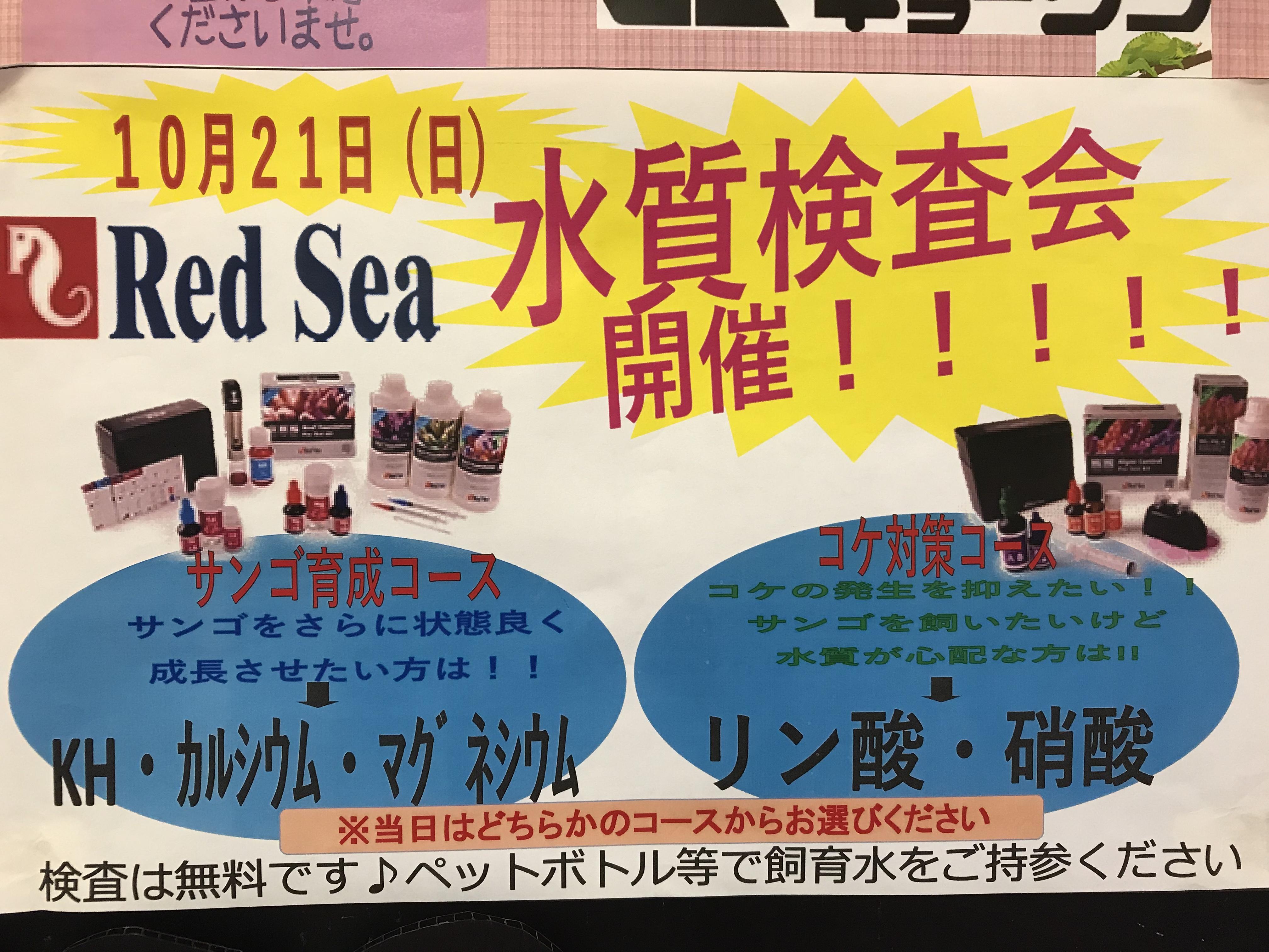 【海水】いよいよ明日です!!