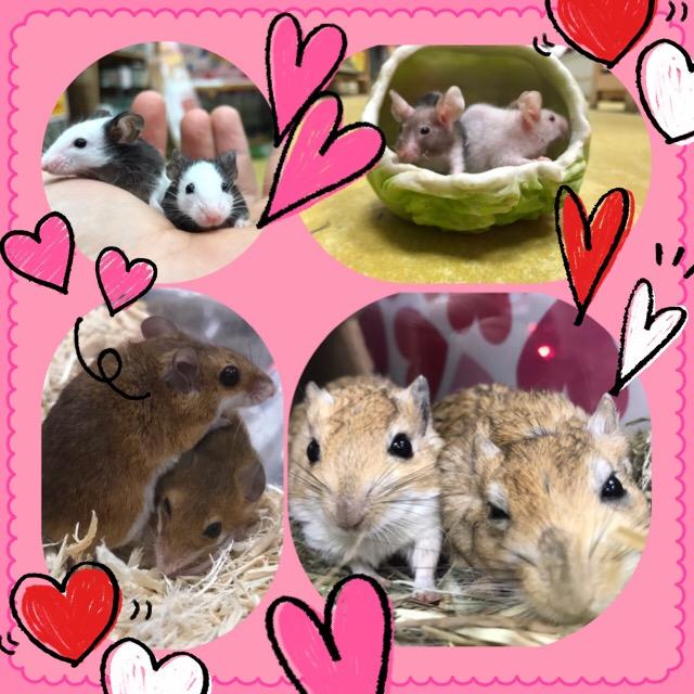 【インター小動物】マウスにネズミのネズミーランド☆